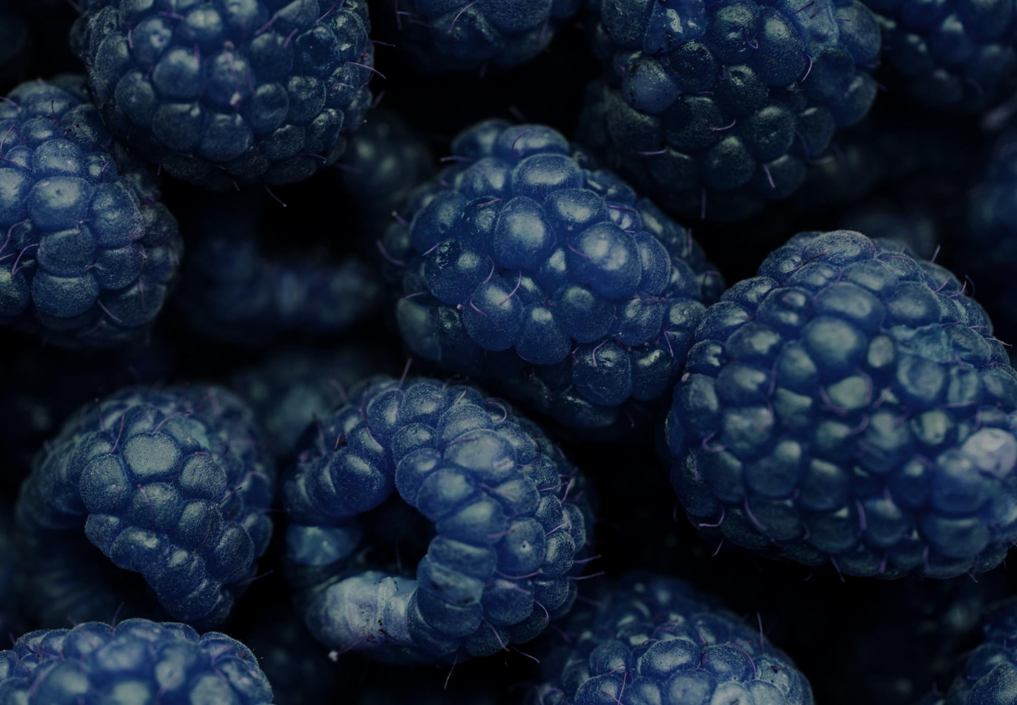 free images background, berry, blackberry, blue, closeupfree images background, berry, blackberry, blue, closeup, delicious, dessert, detox, diet, effect, energy, food, fresh, freshness, fruit, harvest,