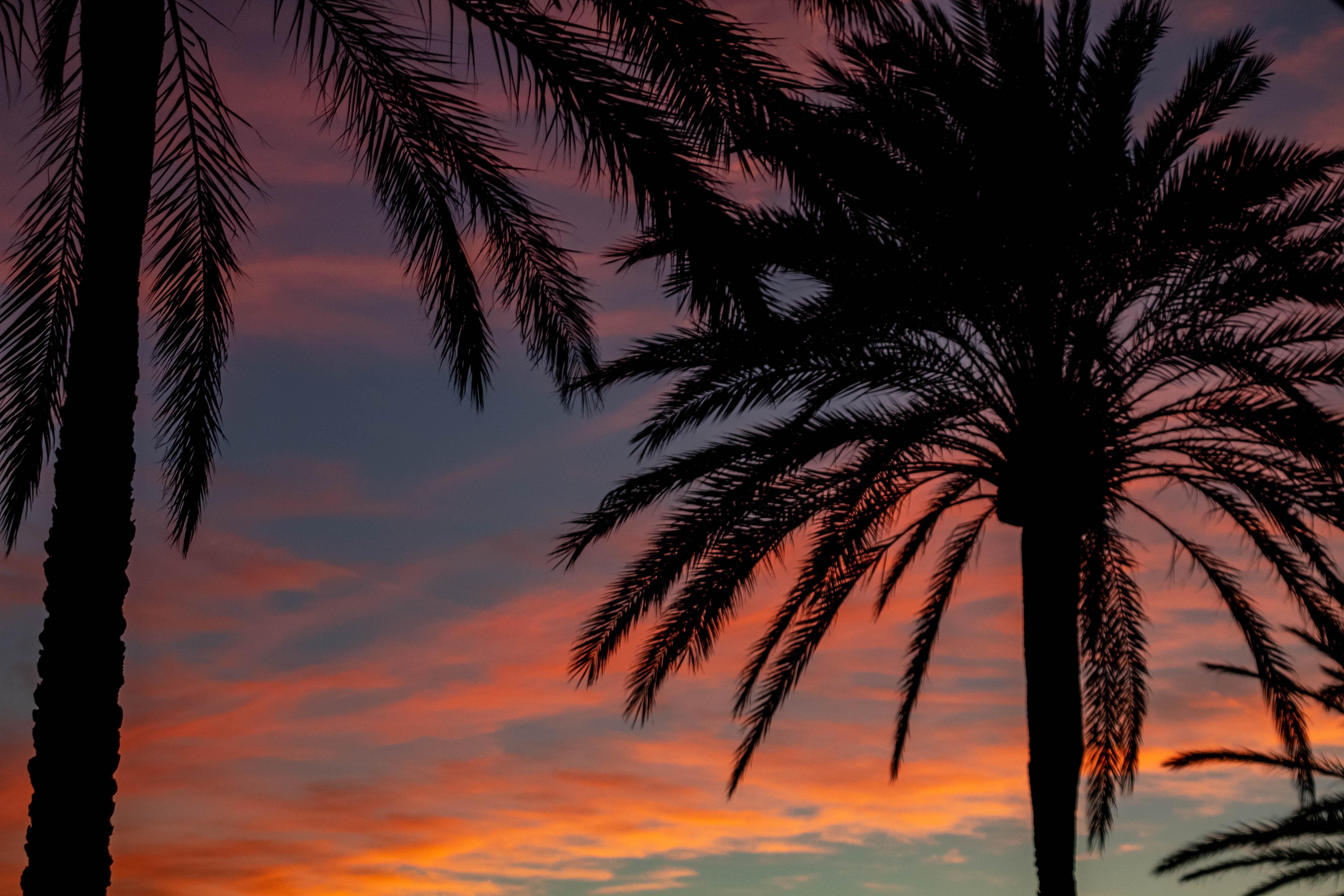 Gambar Backlit Pohon Kelapa Fajar Senja Eksotik