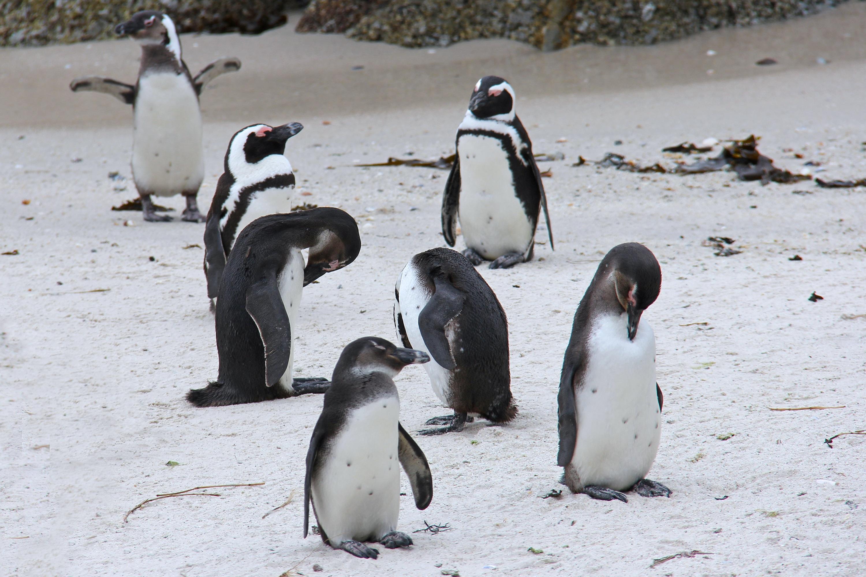 фото пингвинов с цветочками