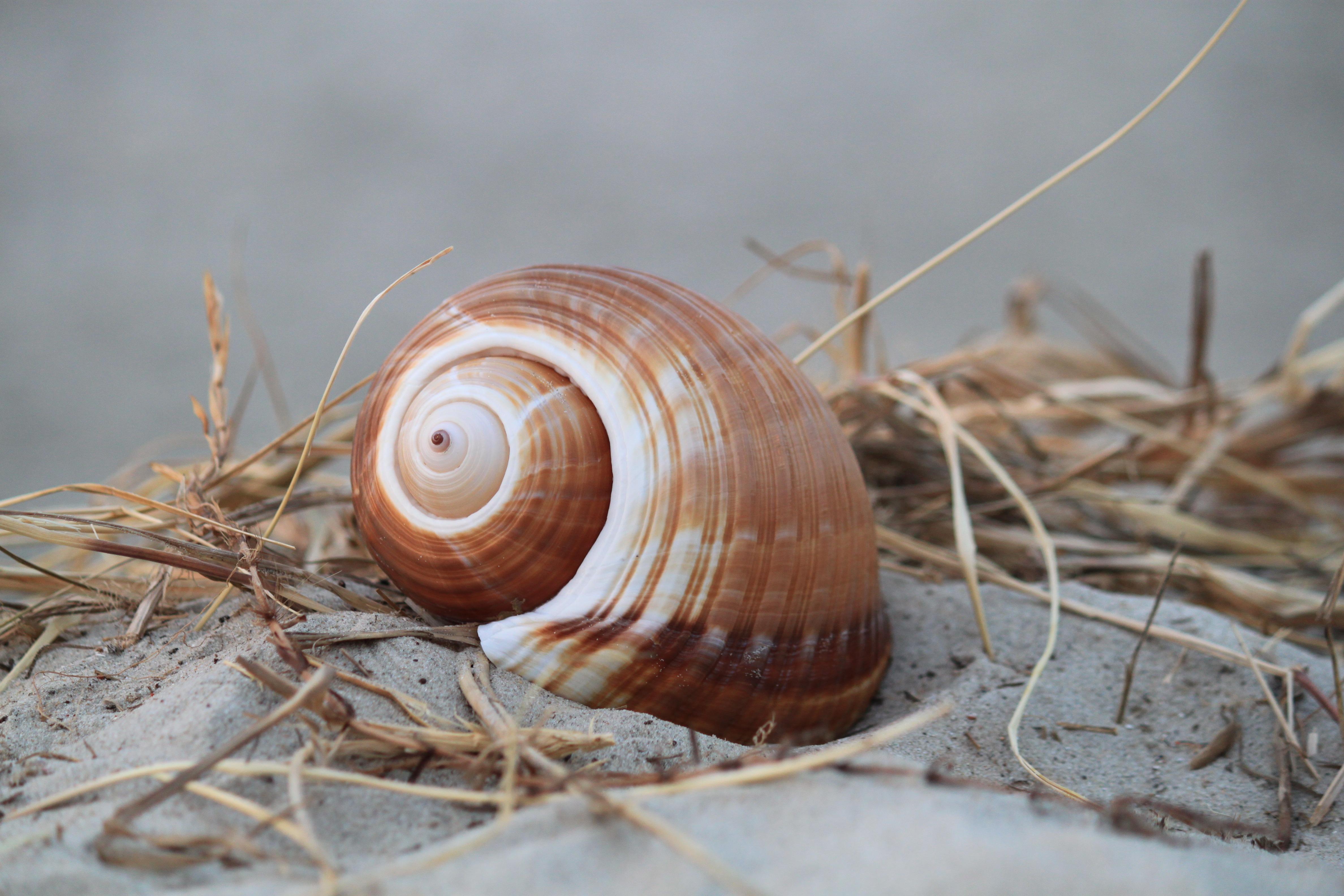 Fotos gratis : costa, naturaleza, espiral, viajar, patrón, fiesta ...