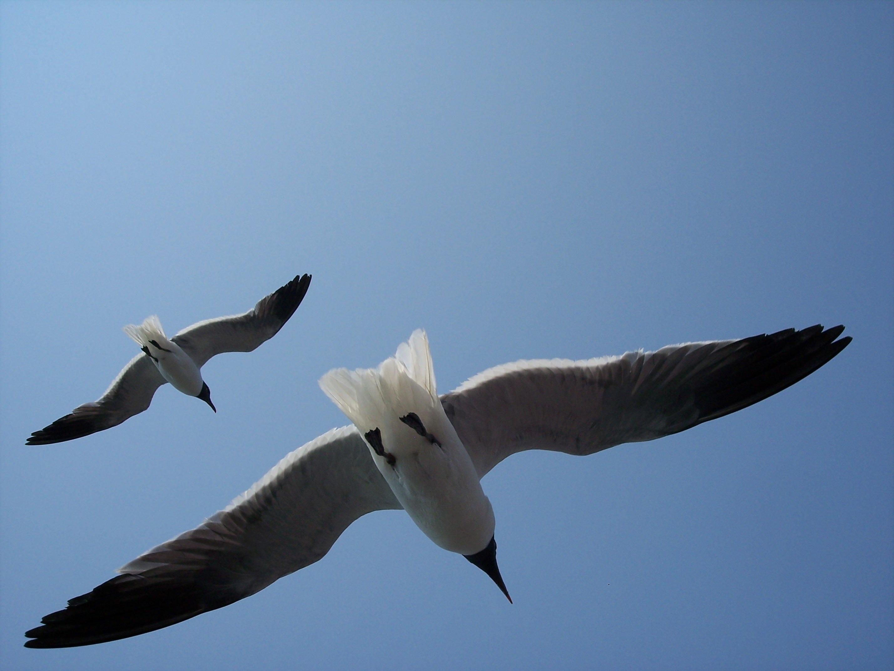 63+ Gambar Burung Elang Laut Gratis Terbaik