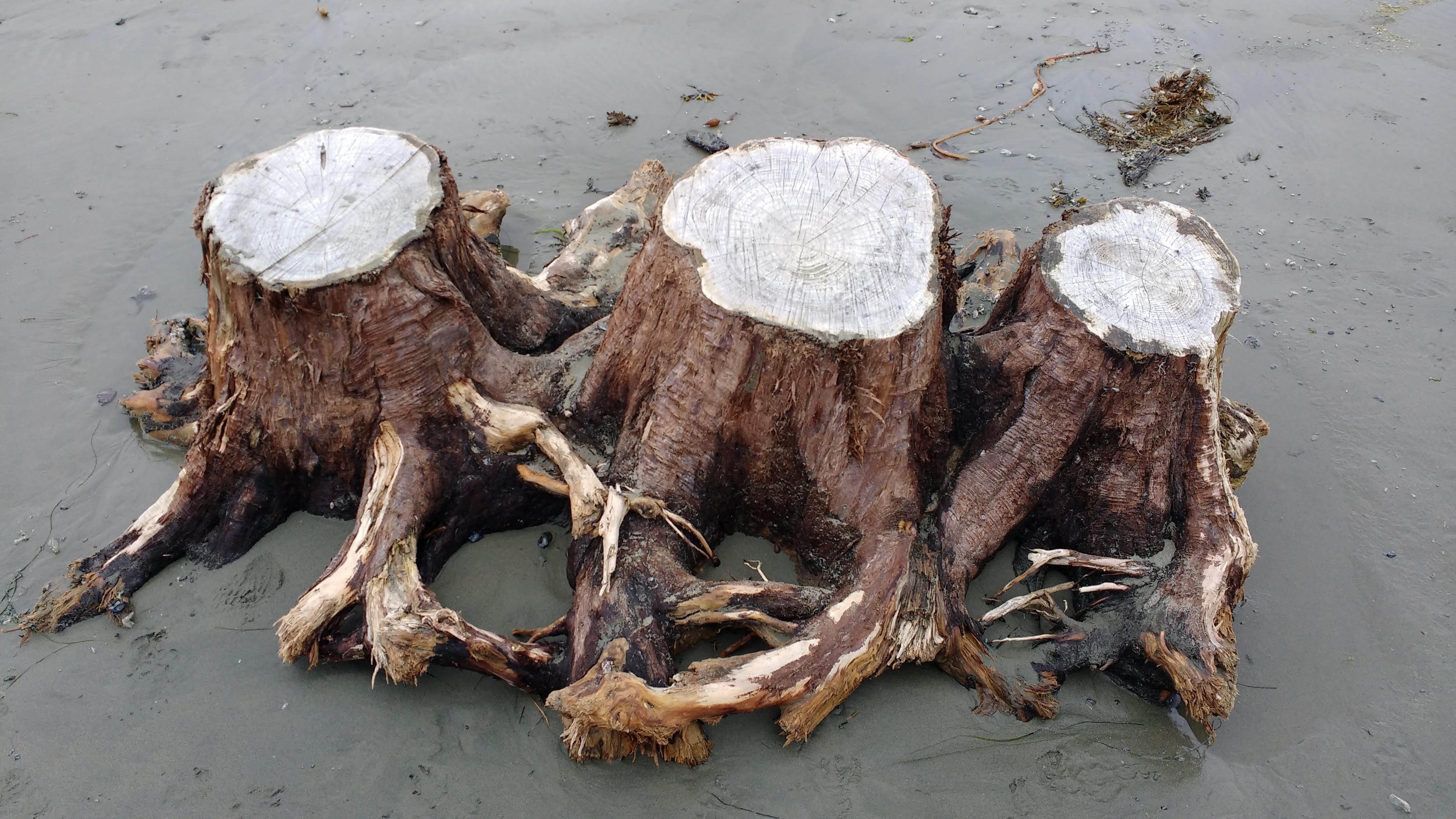 Images Gratuites : plage, bois flotté, la nature, le sable, scénique ...