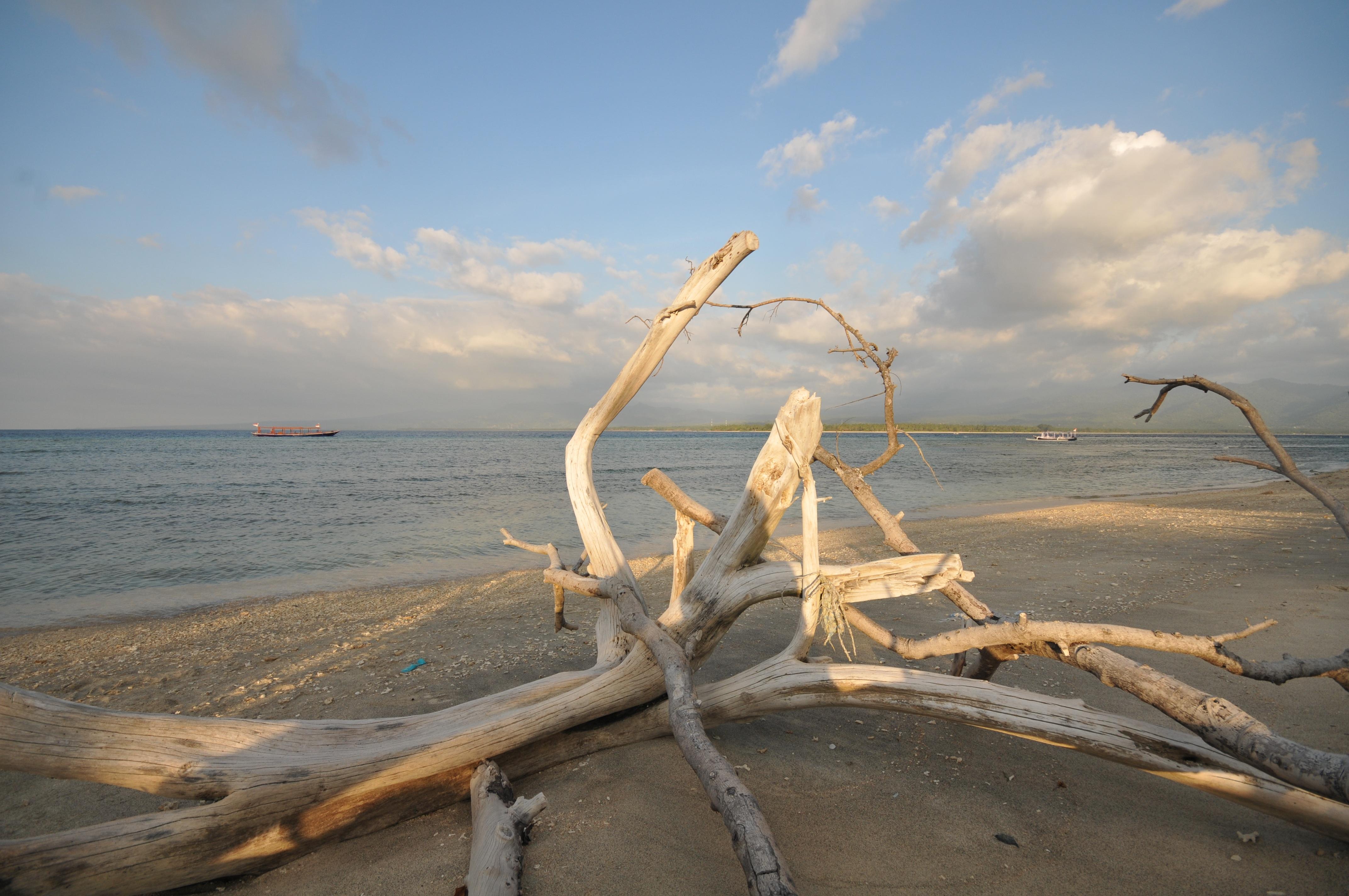 Images gratuites plage bois flott c te le sable for Oiseau en bois flotte