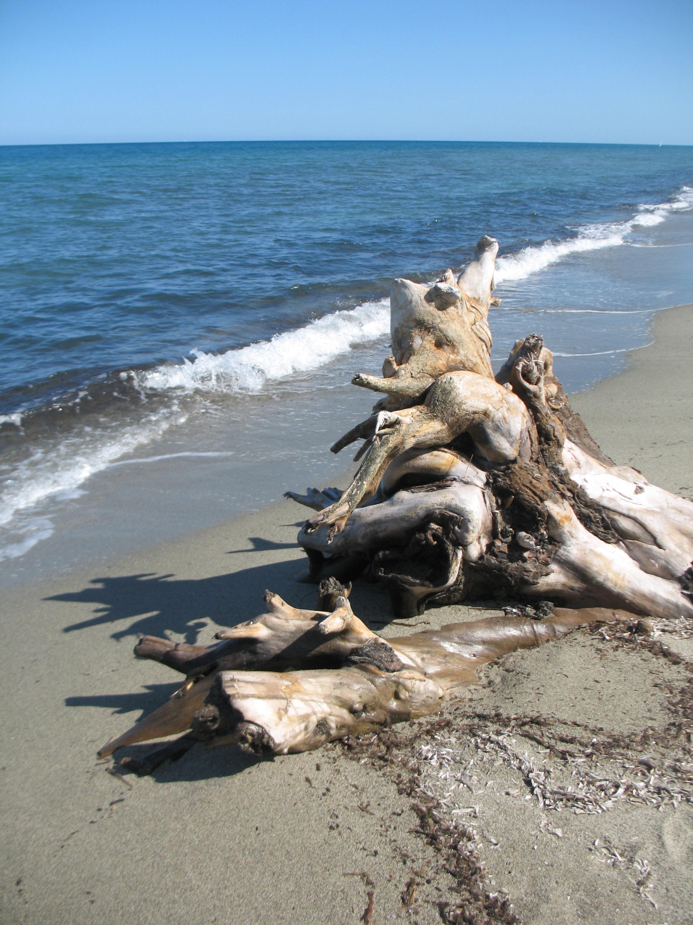 images gratuites plage bois flott mer c te eau le