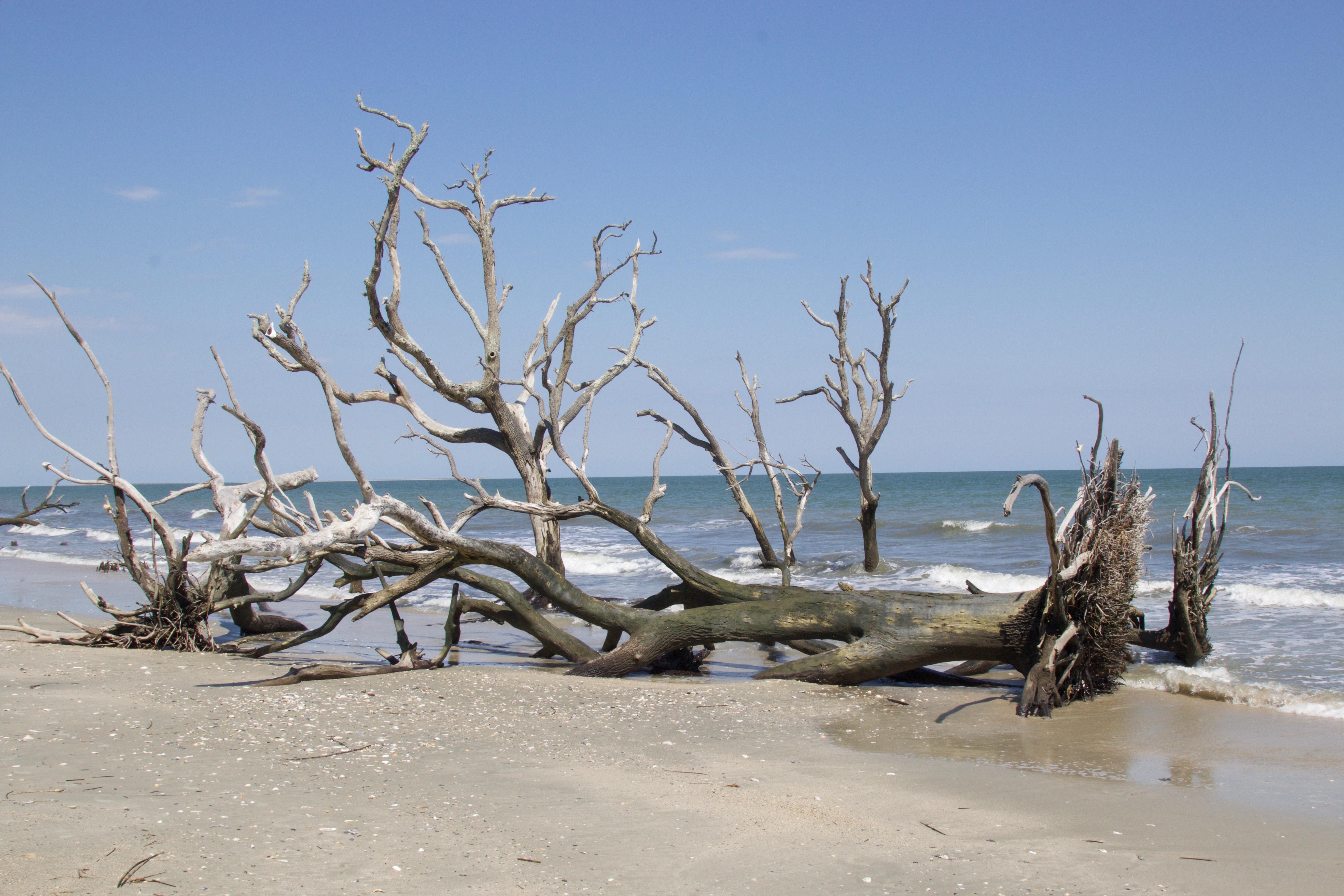 Edisto Island Driftwood Beach