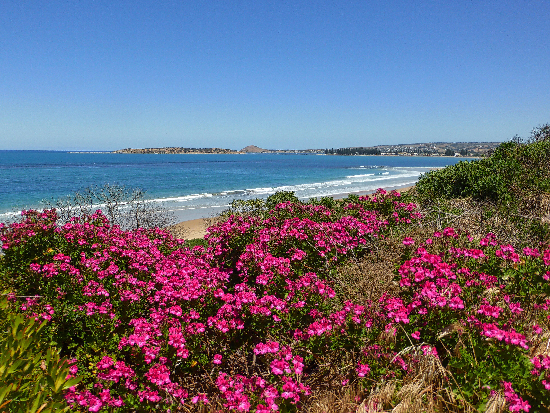 вынуждены были цветы на побережье фото своем
