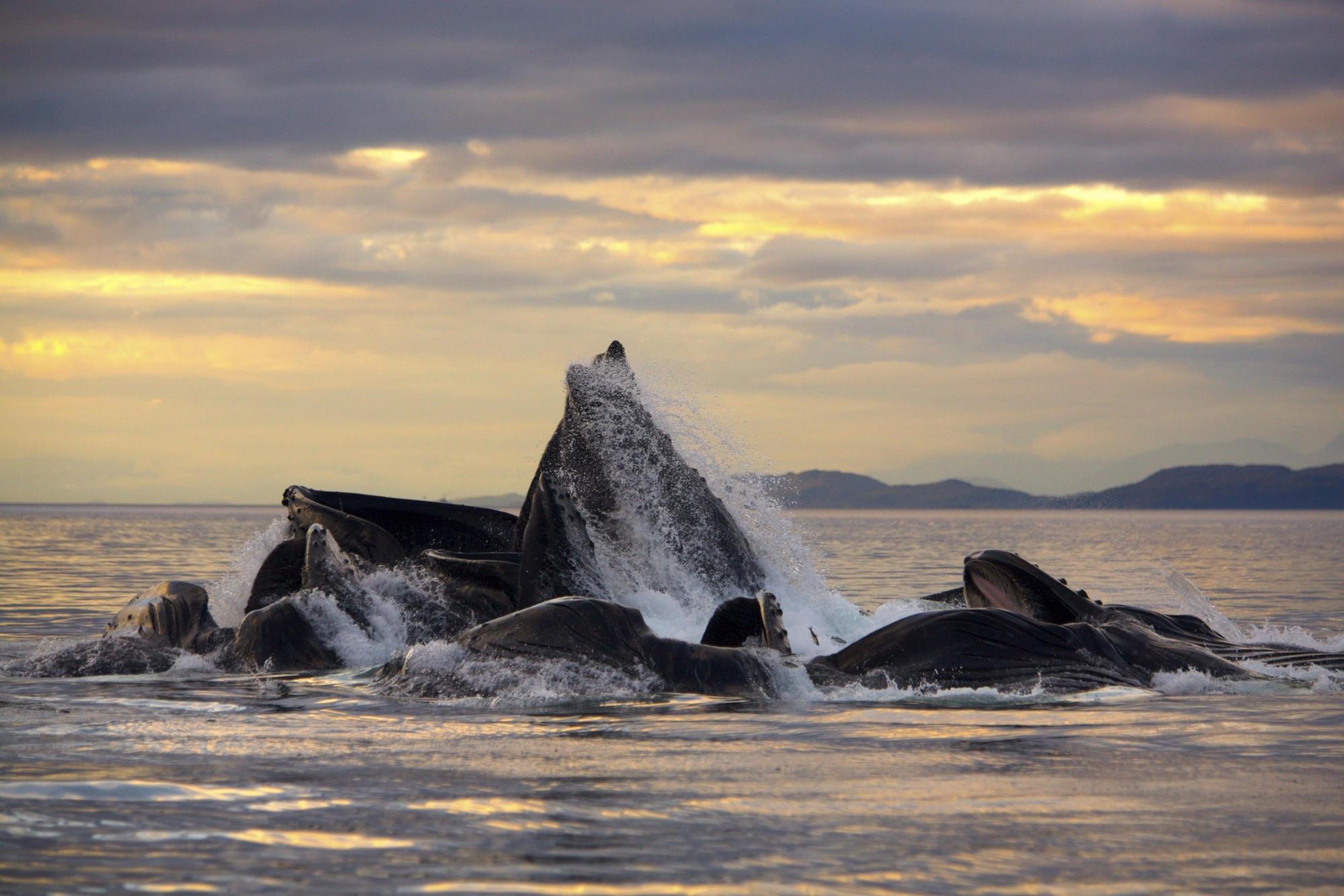 Argentina Beaches besides File 1986 beached whales in Flinders Bay  4 besides Keawaula Beach Yokohama Beach Beaches Oahu Waianae Hi in addition Sayulita likewise Metal On The Black Beach. on whale beach