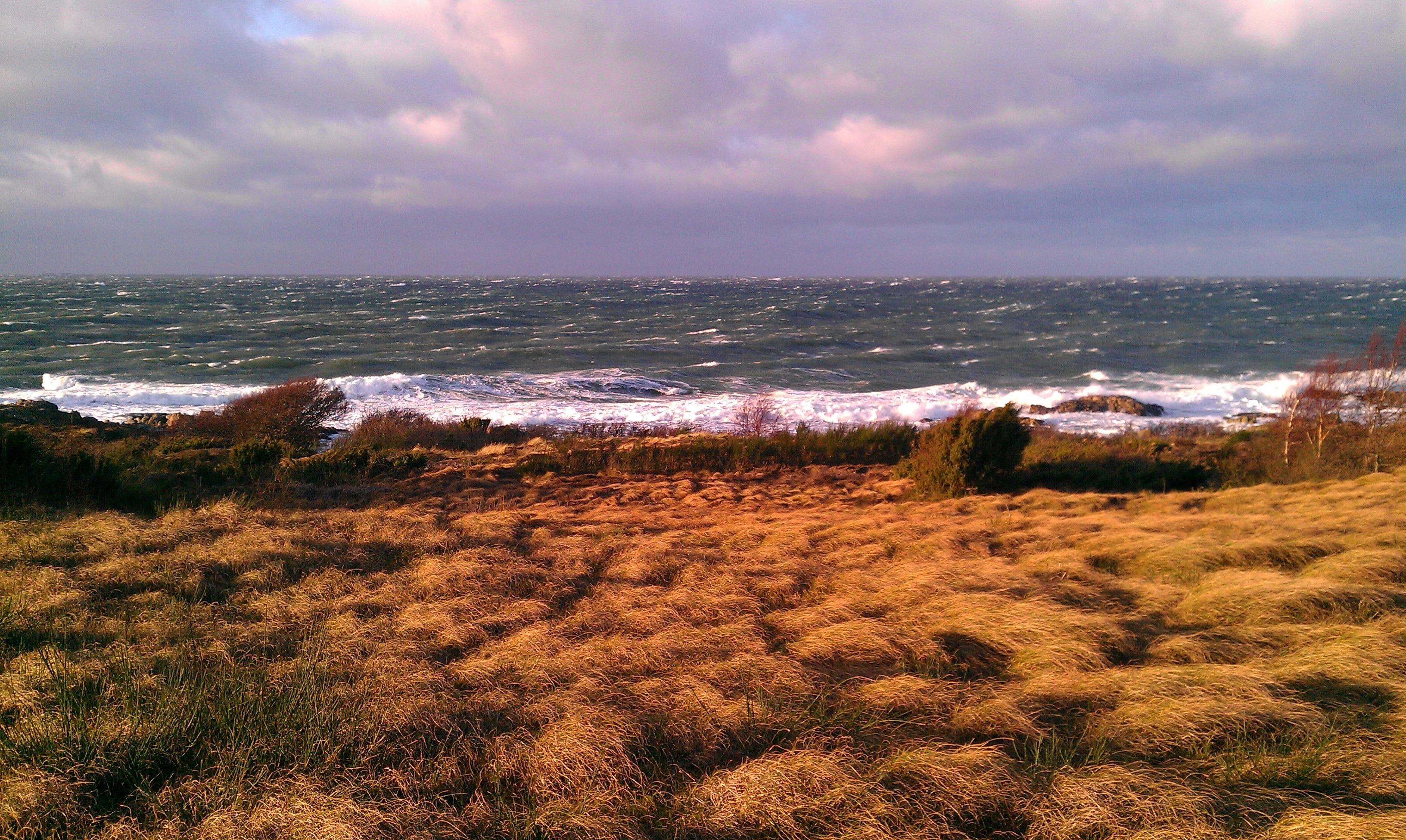 Картинки осенний пейзаж берег балтийского моря