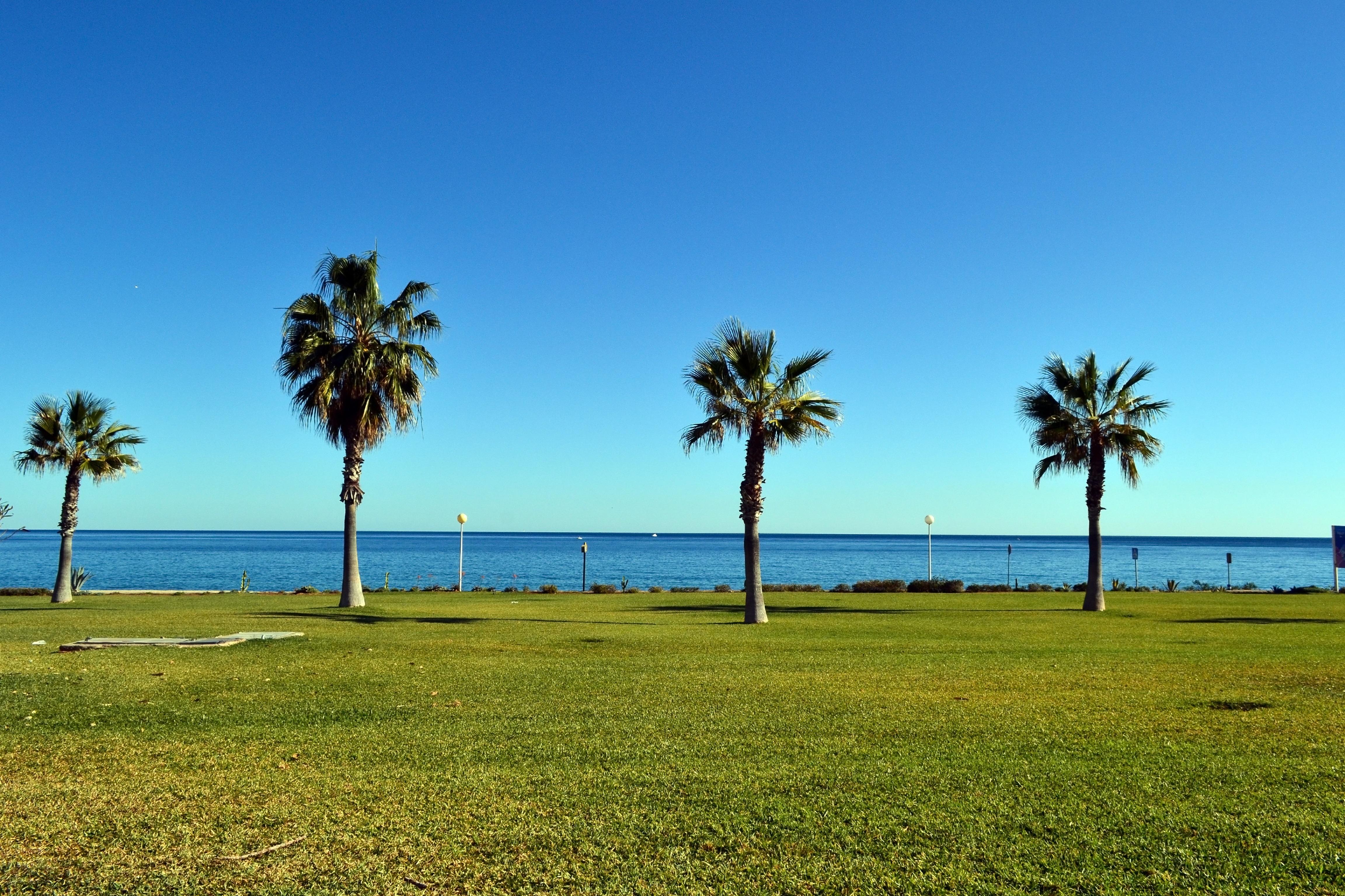 Fotos gratis playa paisaje mar costa rbol c sped for Arboles para plantar en verano