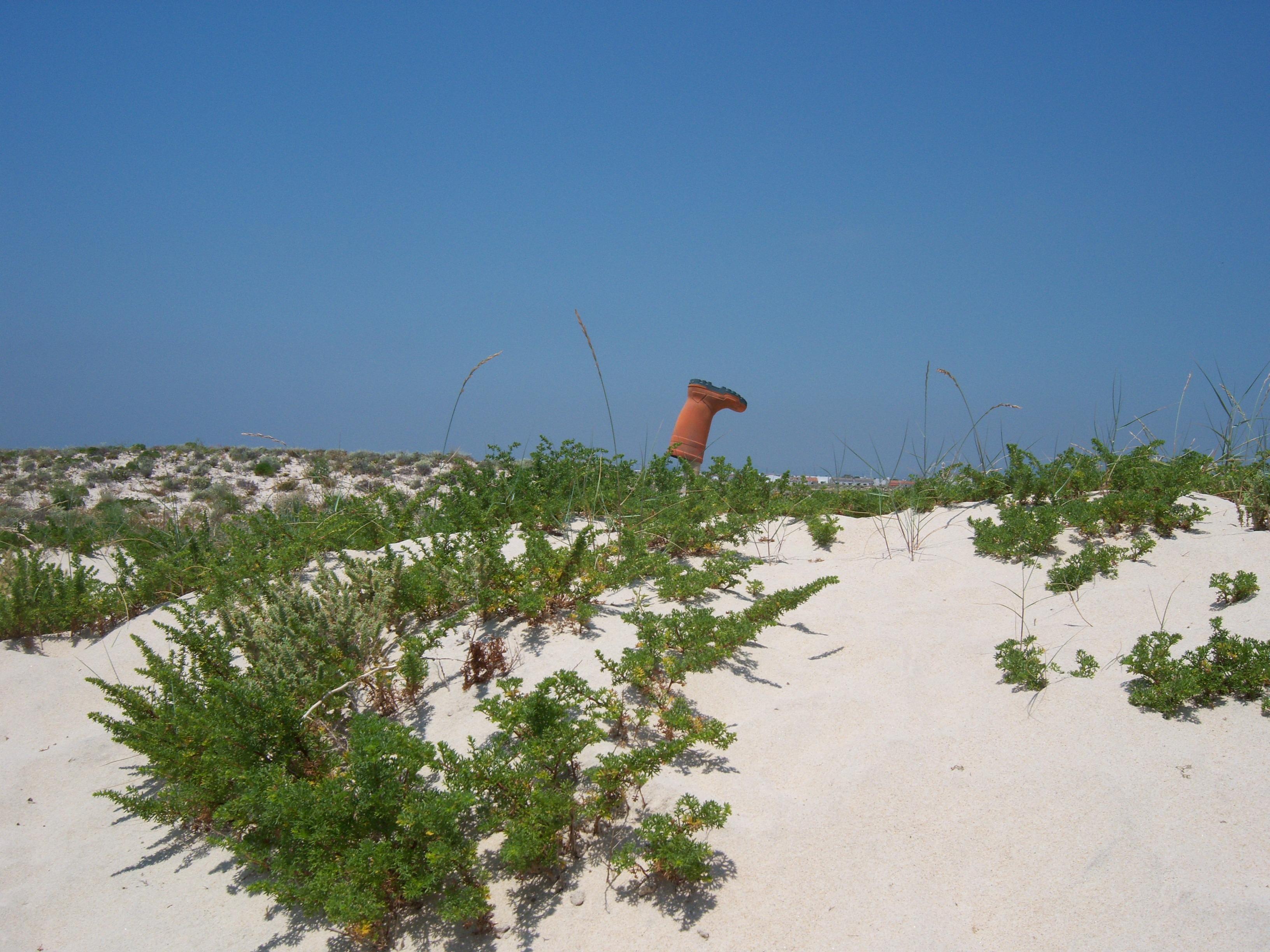 free images beach landscape sea coast tree grass sand sky