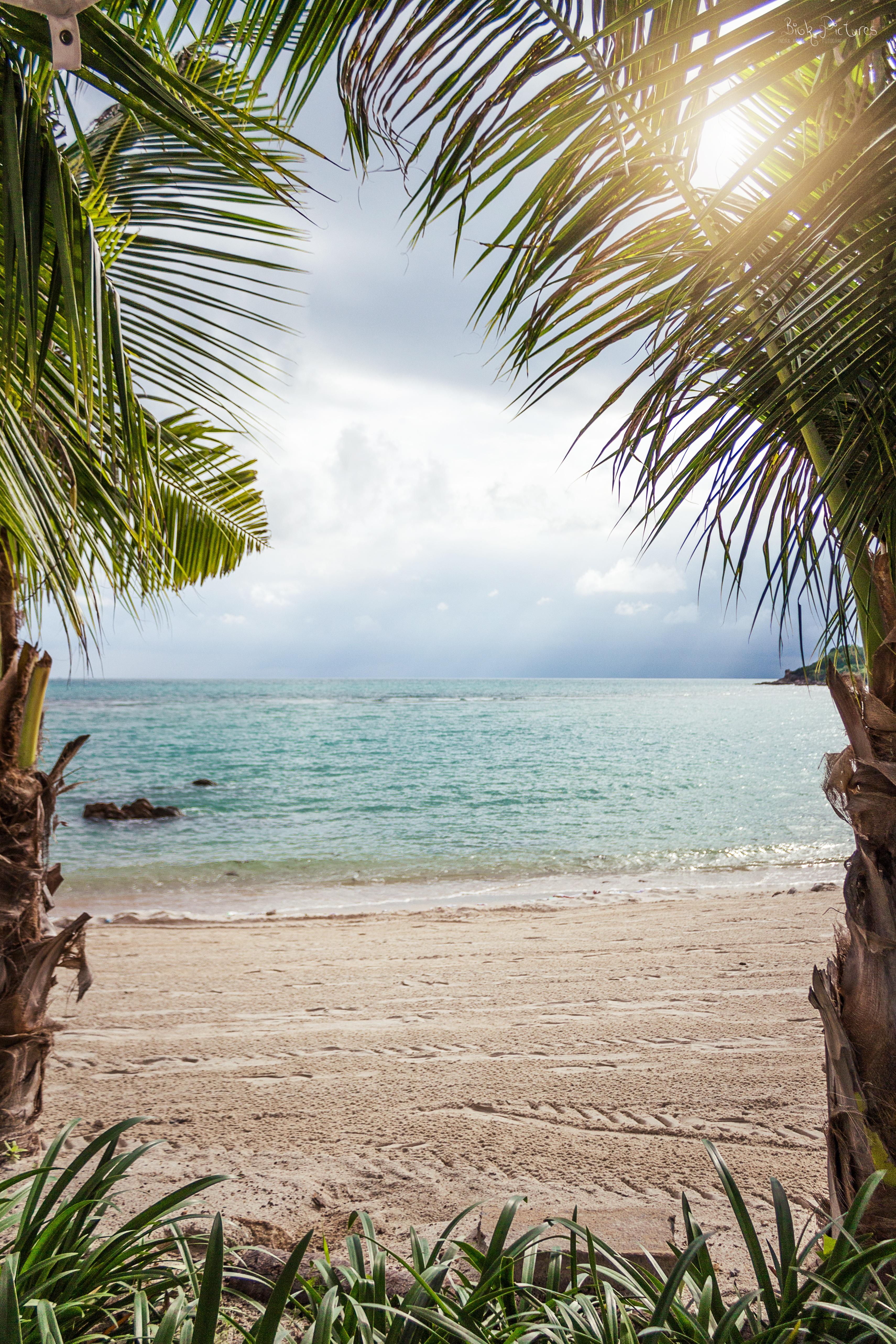images gratuites plage paysage mer c te arbre la nature oc an plante soleil lumi re. Black Bedroom Furniture Sets. Home Design Ideas