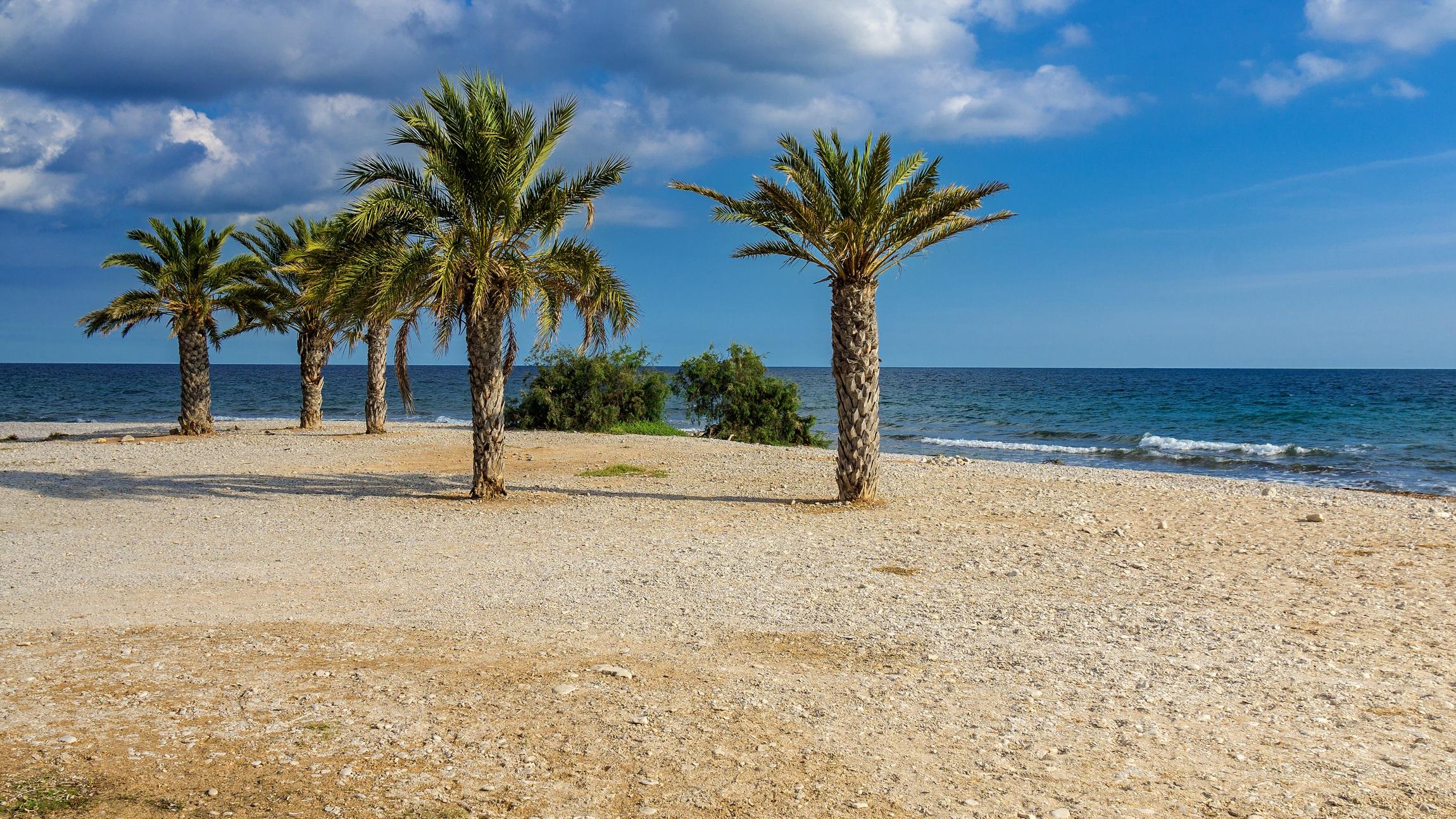 Free Images Landscape Sea Coast Nature Ocean Horizon Plant Sky Sun Palm Tree Shore View Vacation Holiday Tourism Spain Caribbean