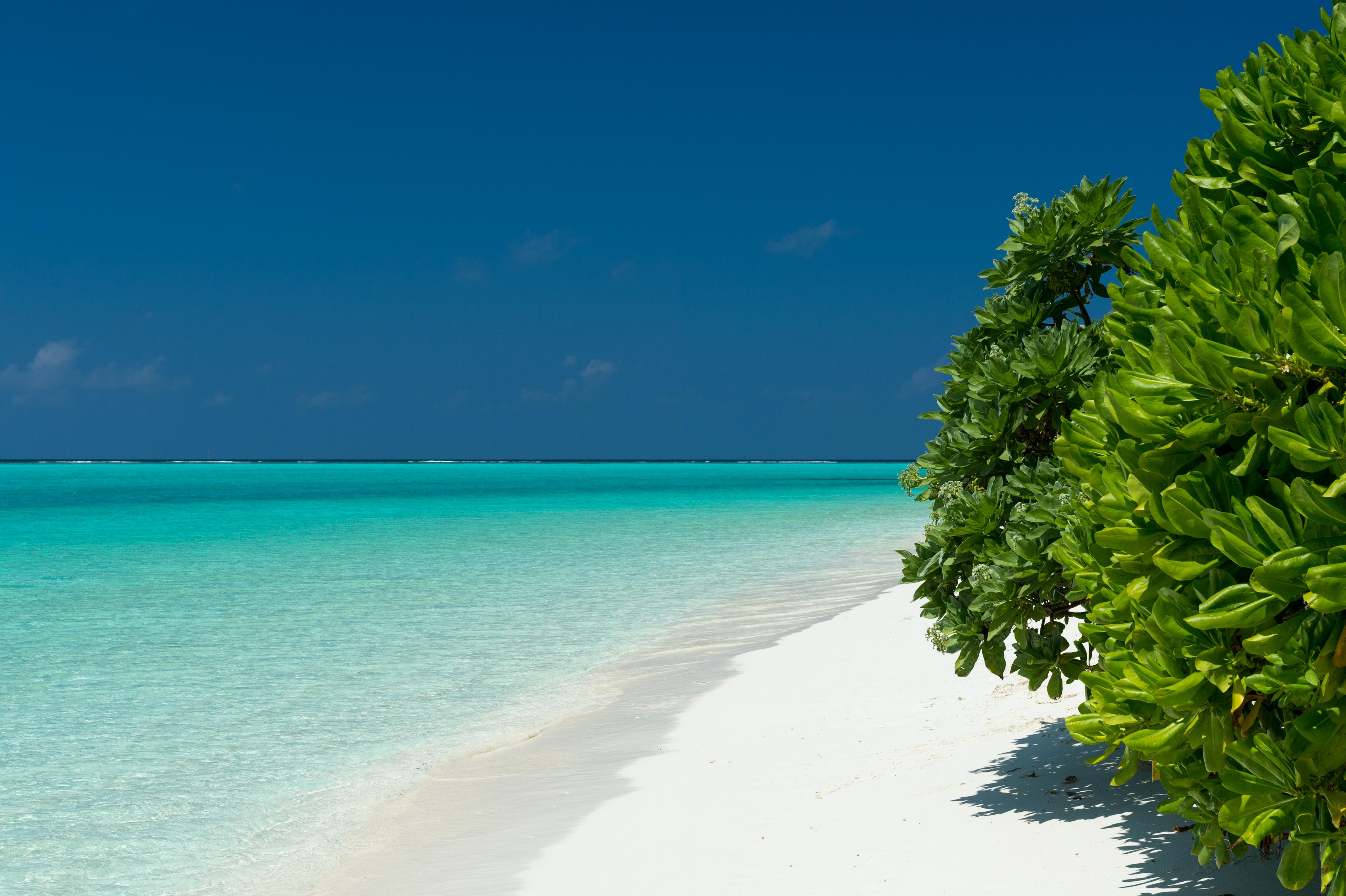 природа деревья отдых мальдивы бесплатно
