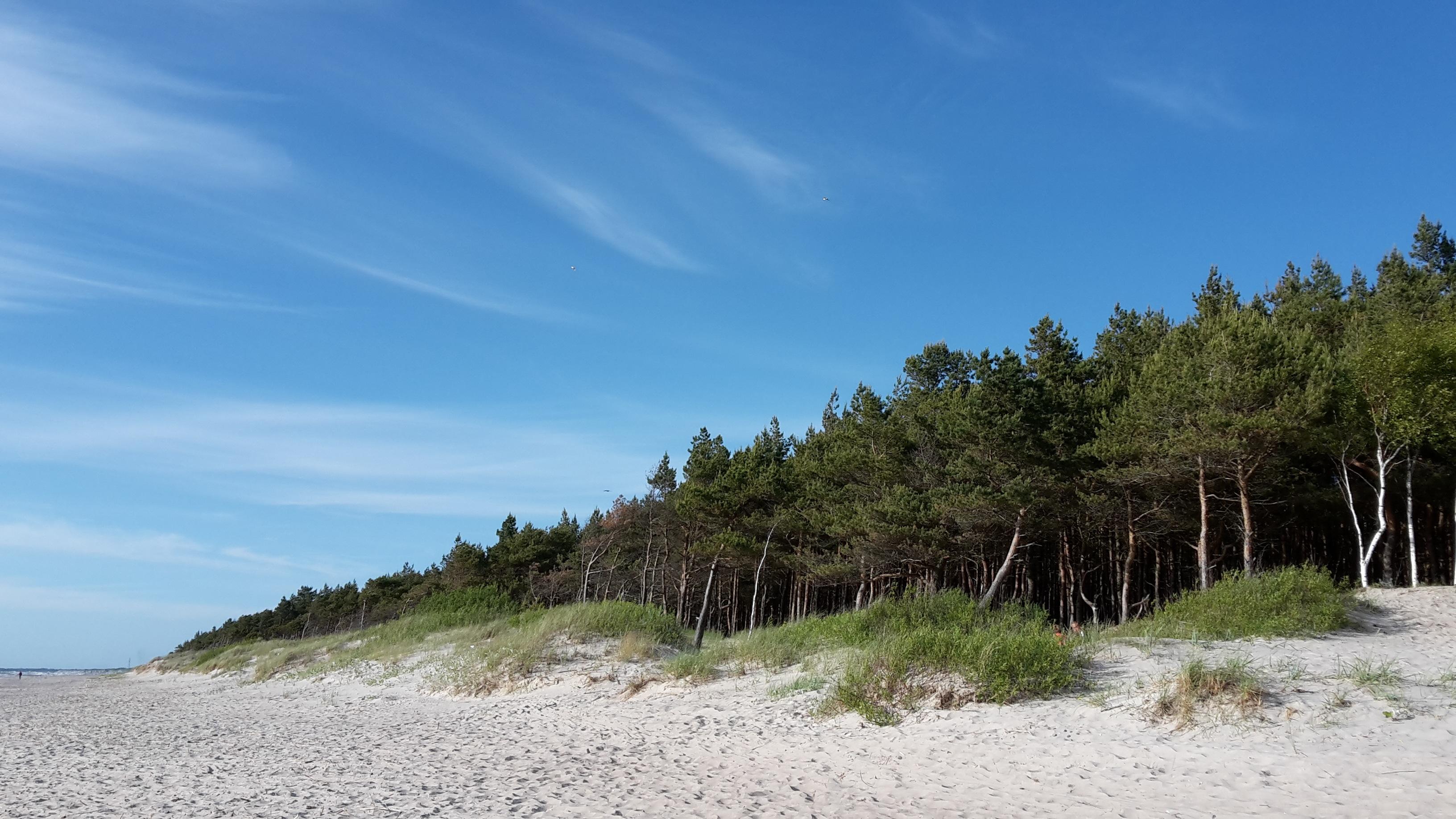 обходили все картинка соснового леса отдых на море царь отлично подойдут