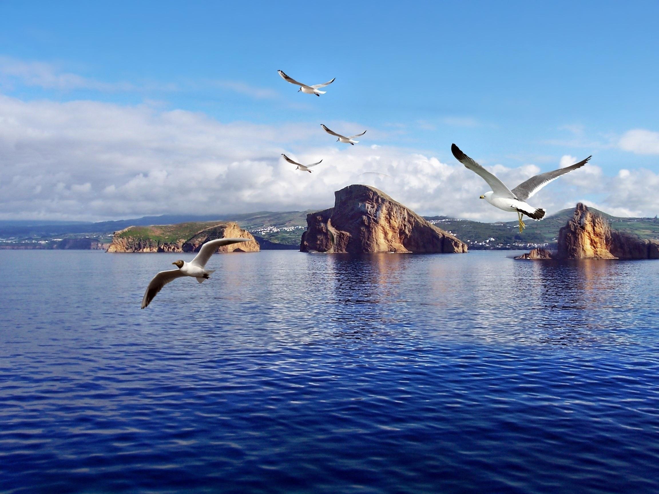 это, естественно, картинки с птицами на природе с морем девушки ребята говорят