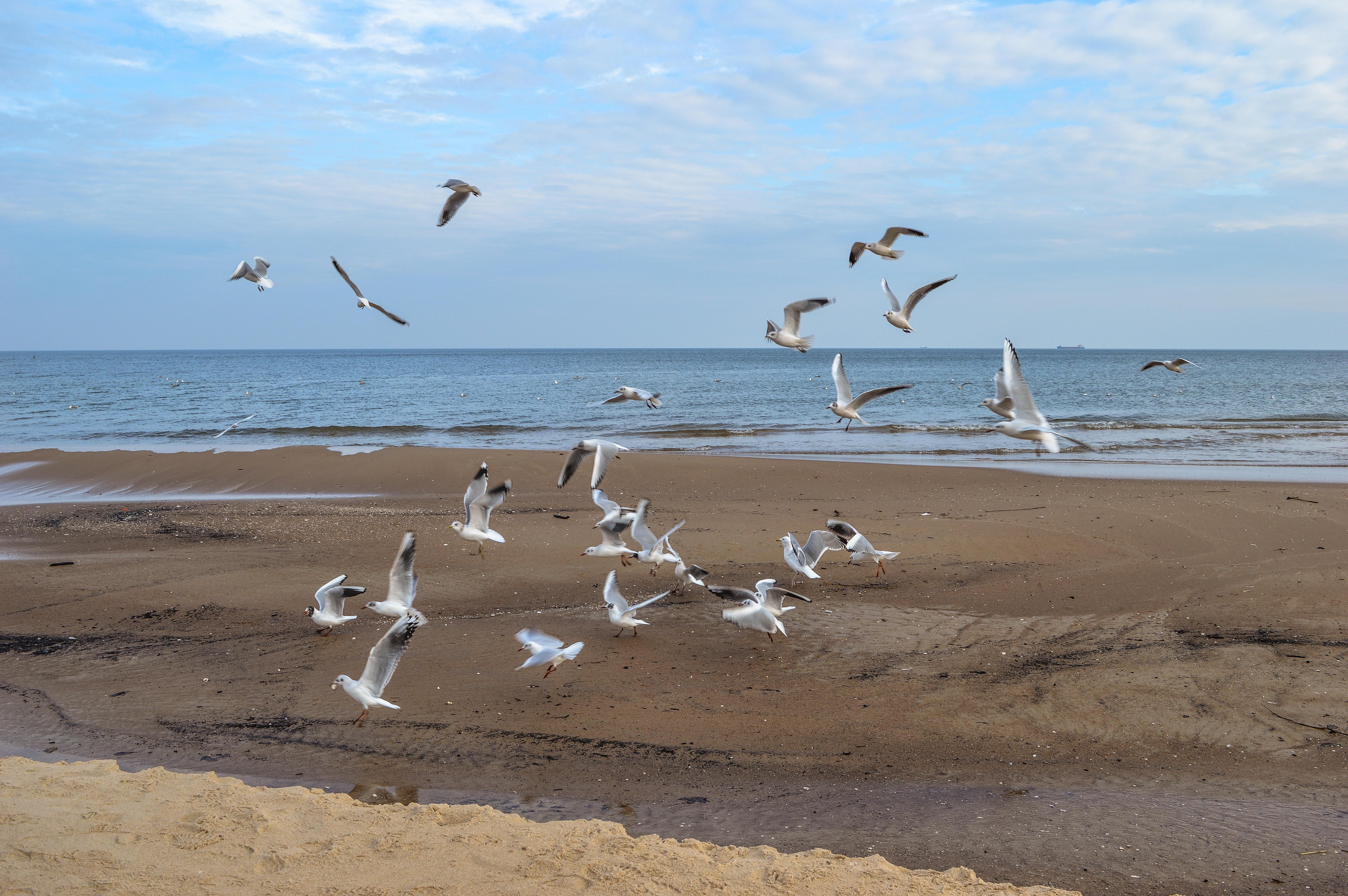 Чайка на песке загрузить