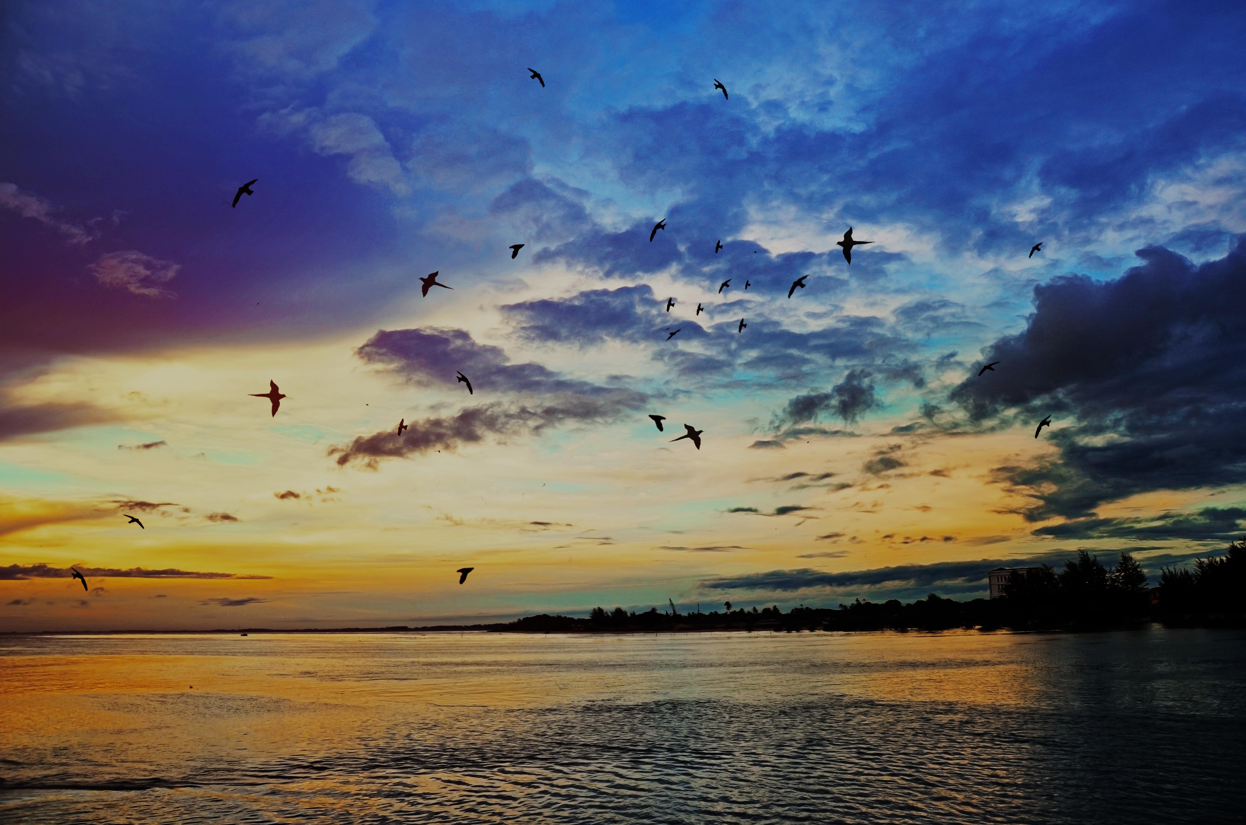 место, красивое фото облака птицы закат рассвет установить
