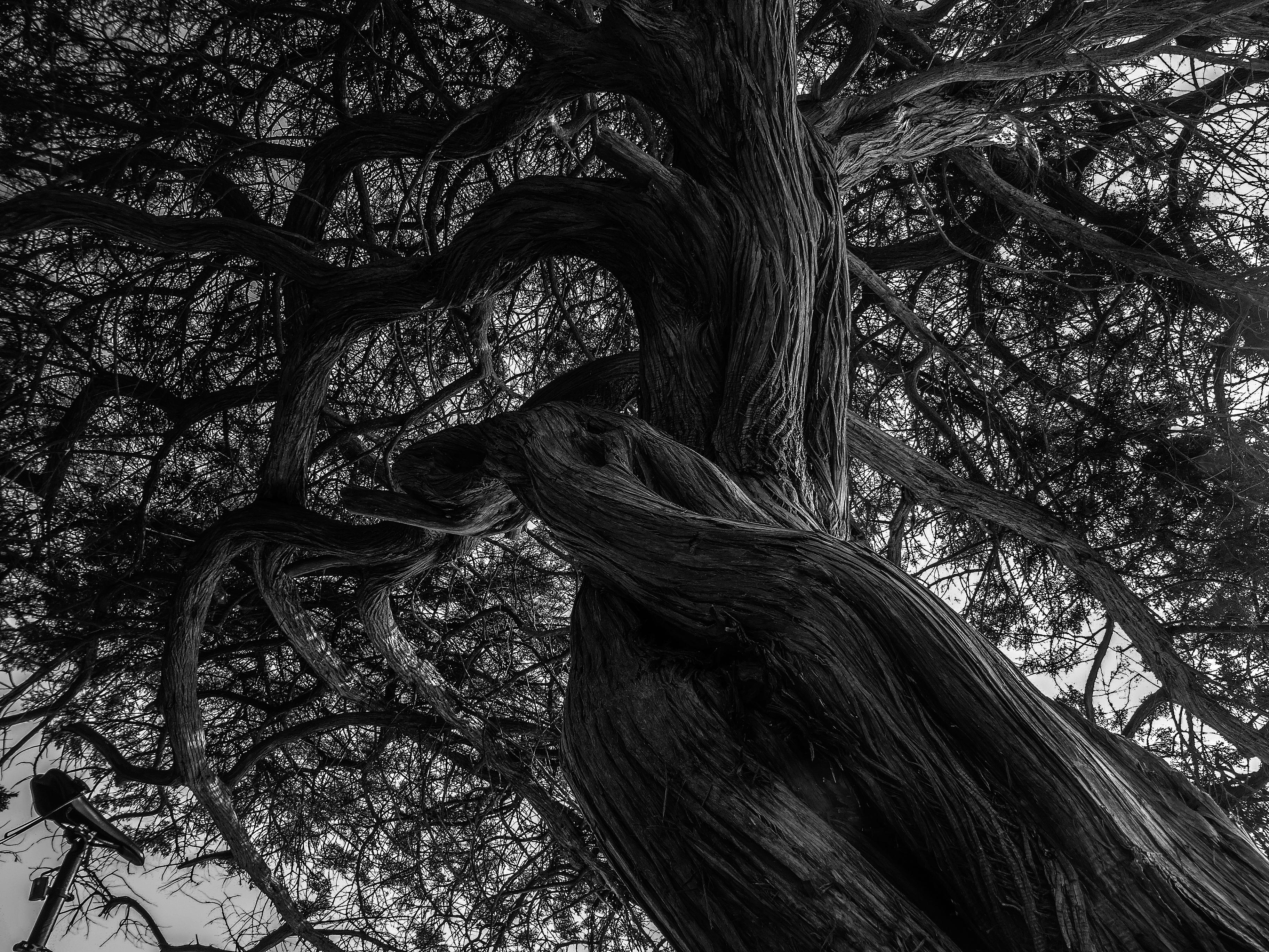 Фото дерево черно белое