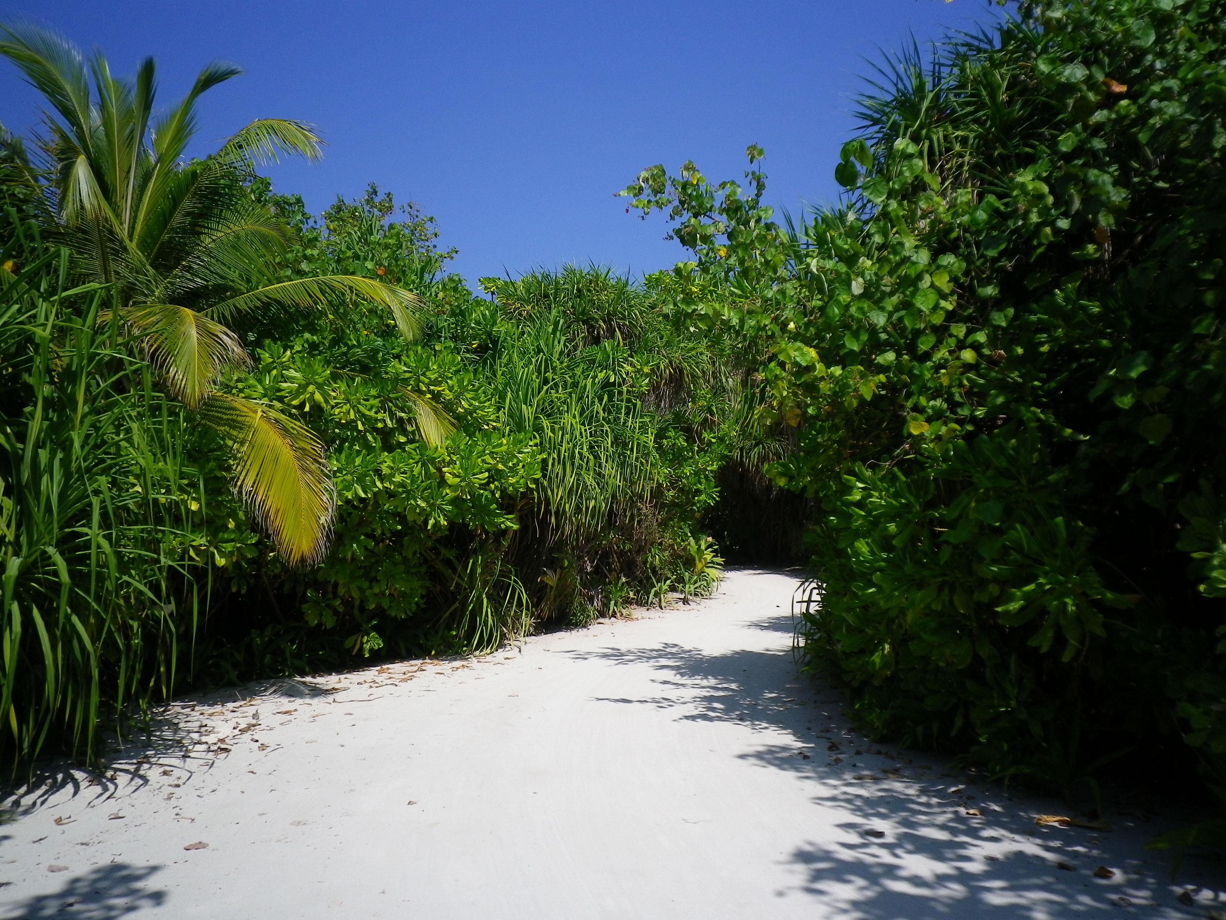 Free Images : beach, landscape, tree, nature, grass, sky, leaf ...