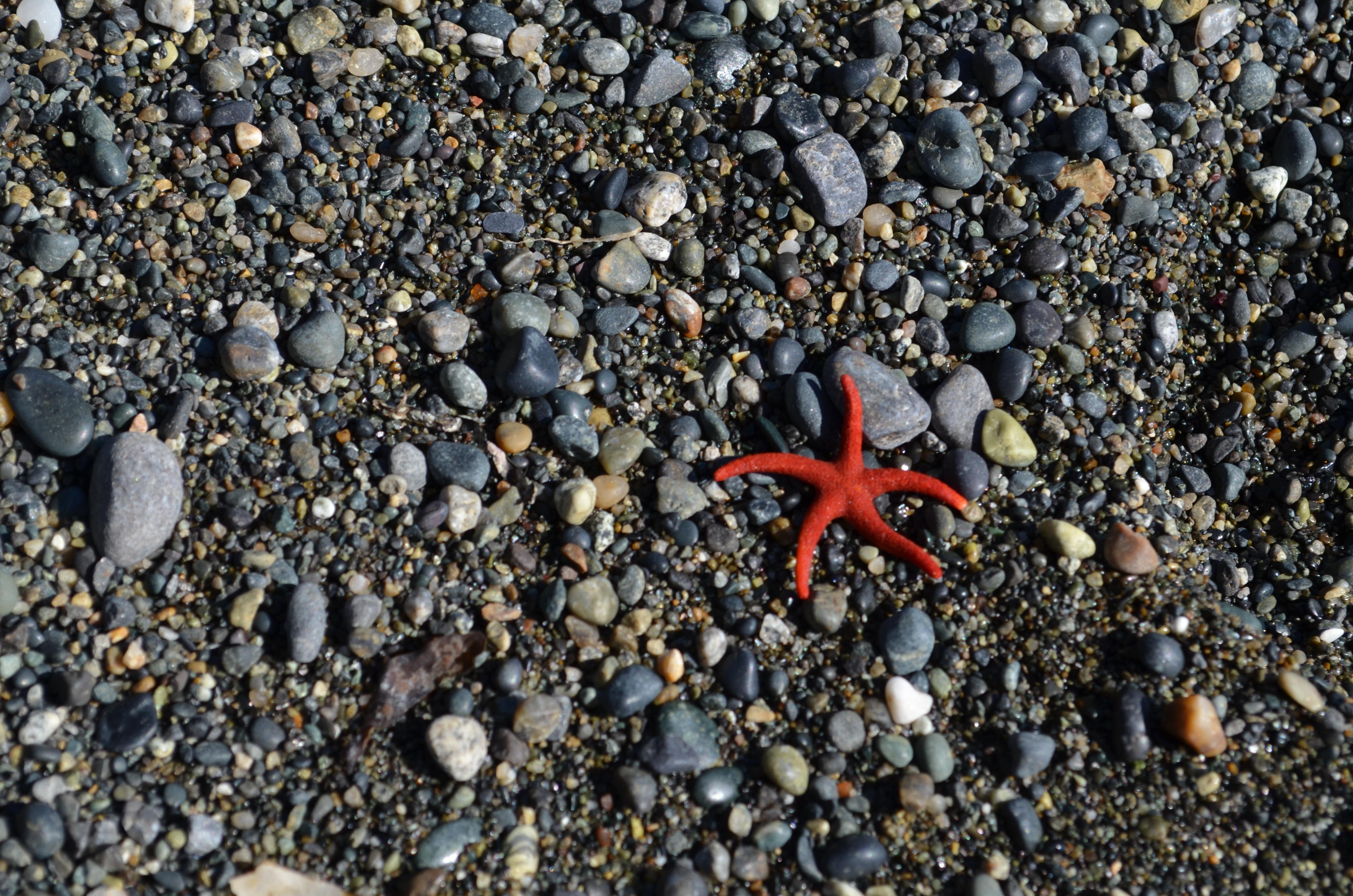Kostenlose foto : Strand, Natur, Sand, Rock, Star, Tier, Asphalt ...