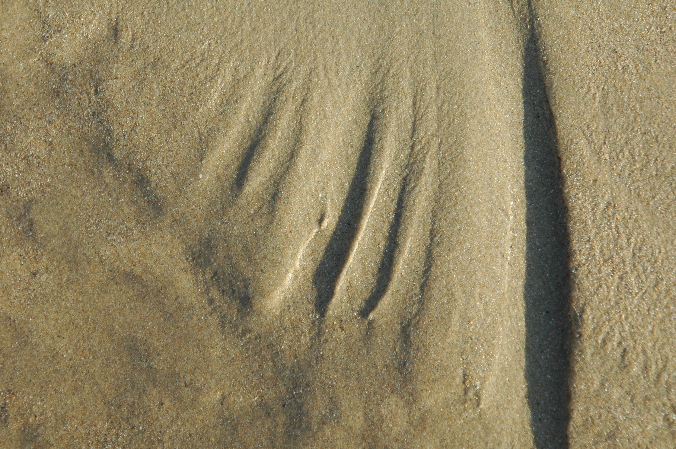 Beach Nature Sand Rock Wood Texture Floor Wall Soil Material Design Flooring Background