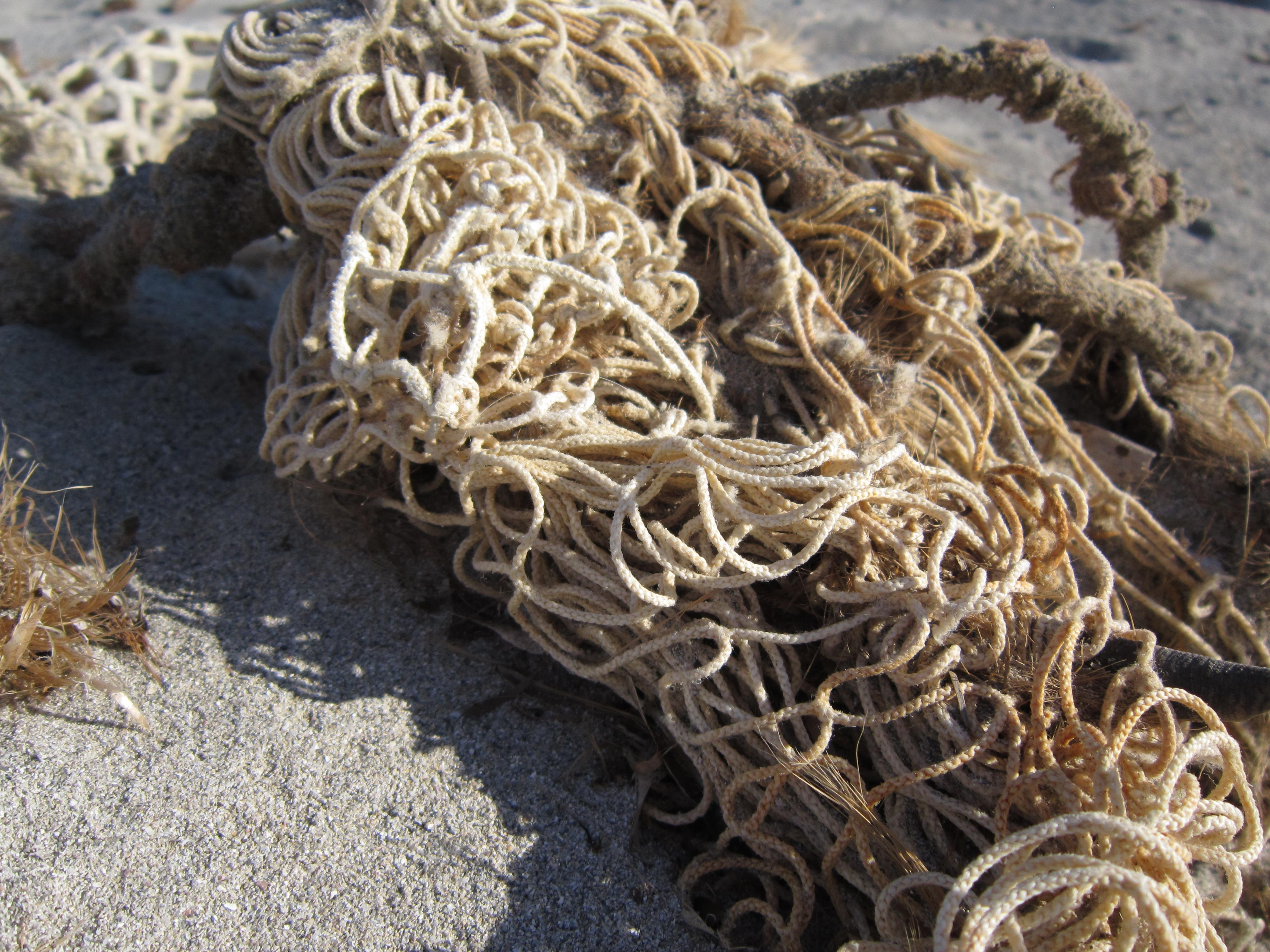 Gambar Pantai Pasir Rumput Laut Dekat Akar Kalah
