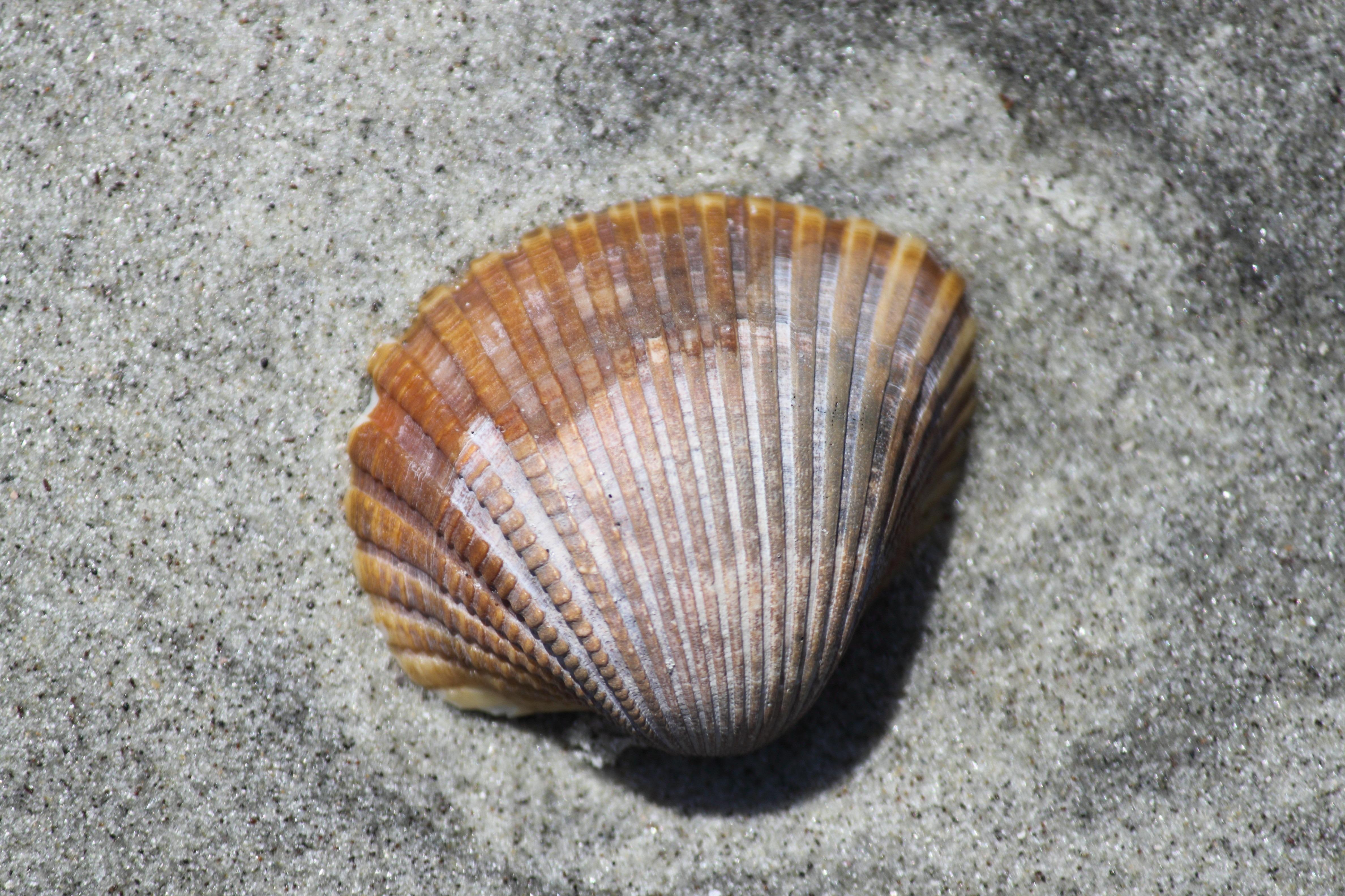 Gambar Pasir Makanan Laut Mati Pantai Laut Bahan Kulit