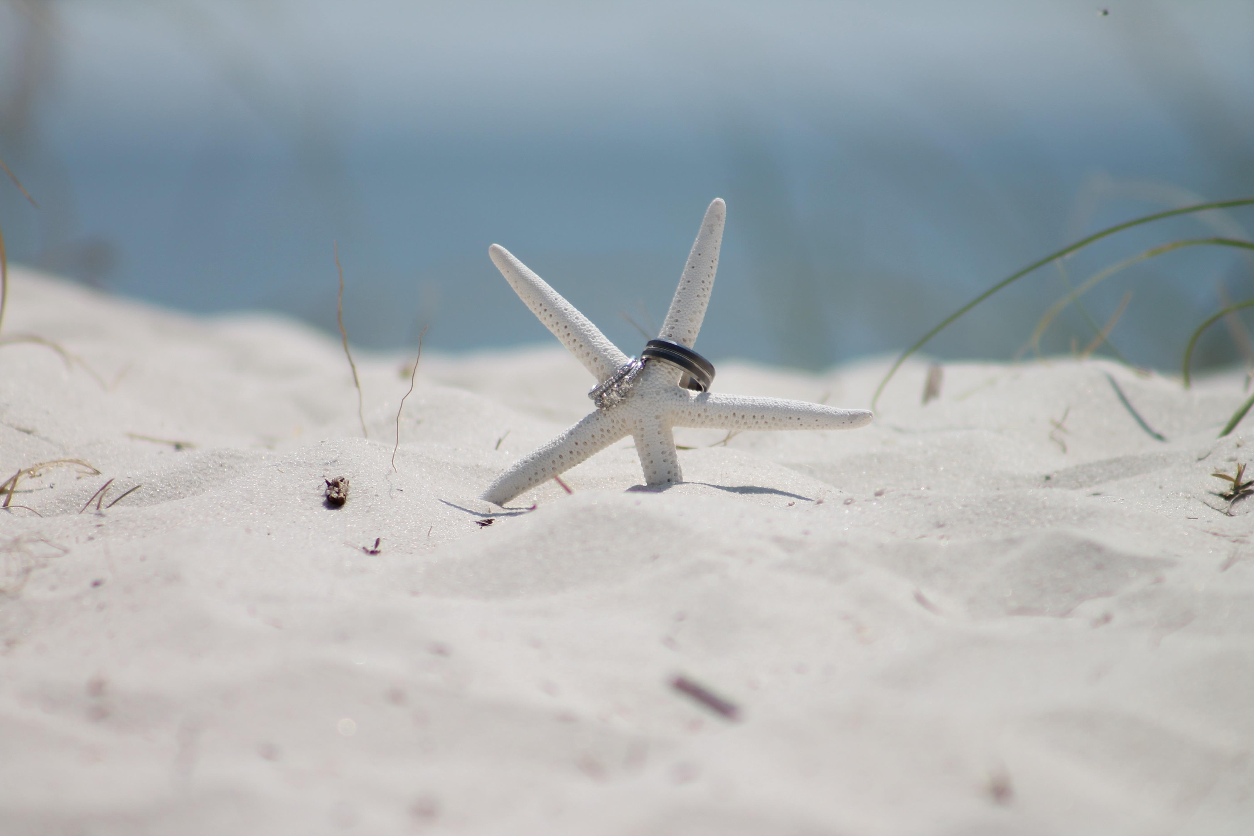 Matrimonio Spiaggia Inverno : Immagini belle : spiaggia sabbia la neve inverno ala vento