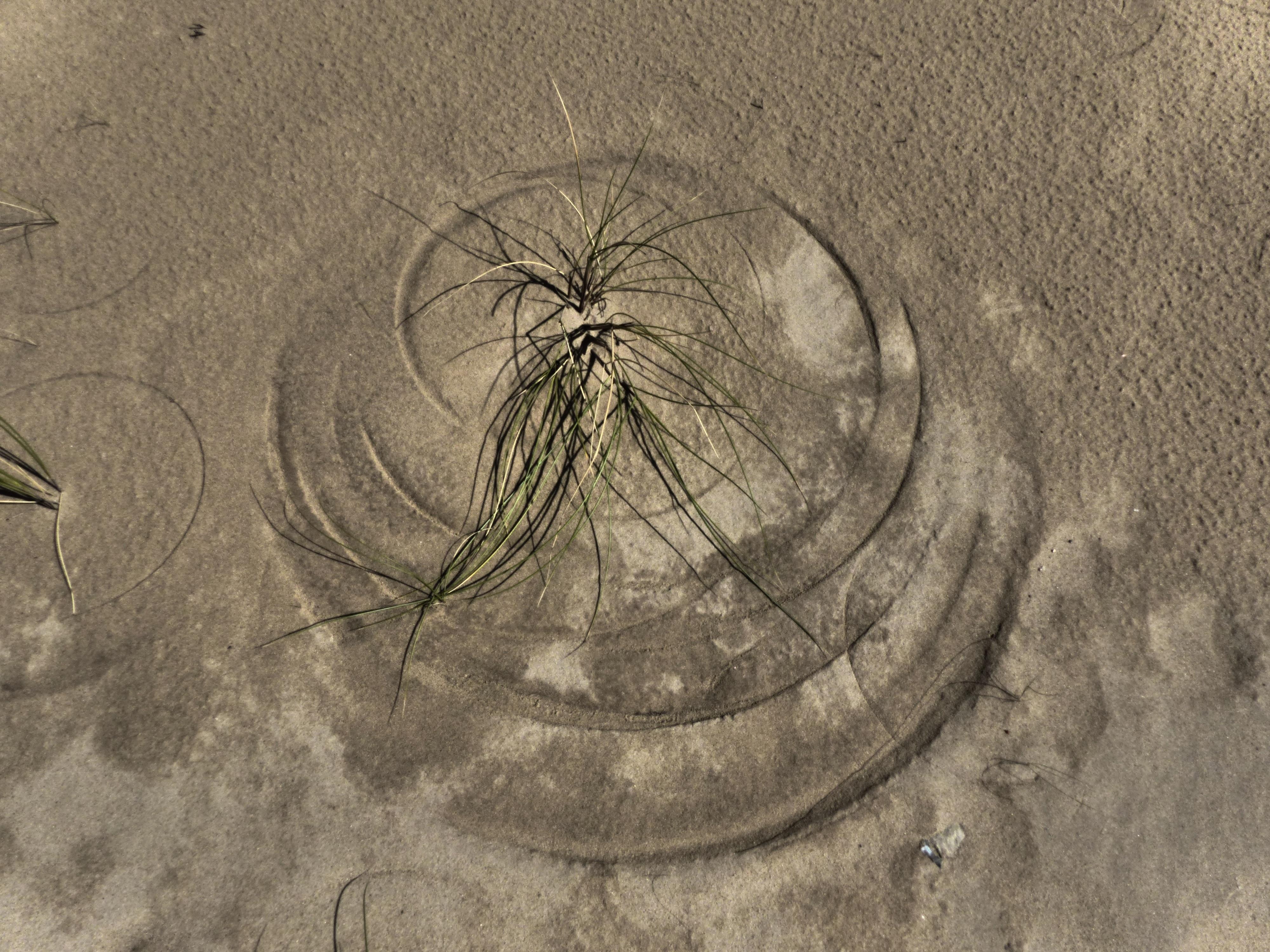 Kostenlose Foto Struktur Textur Boden Kreis Ornament Grashalm