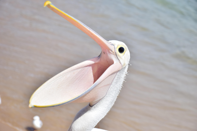 Veľké vtáky na pláži