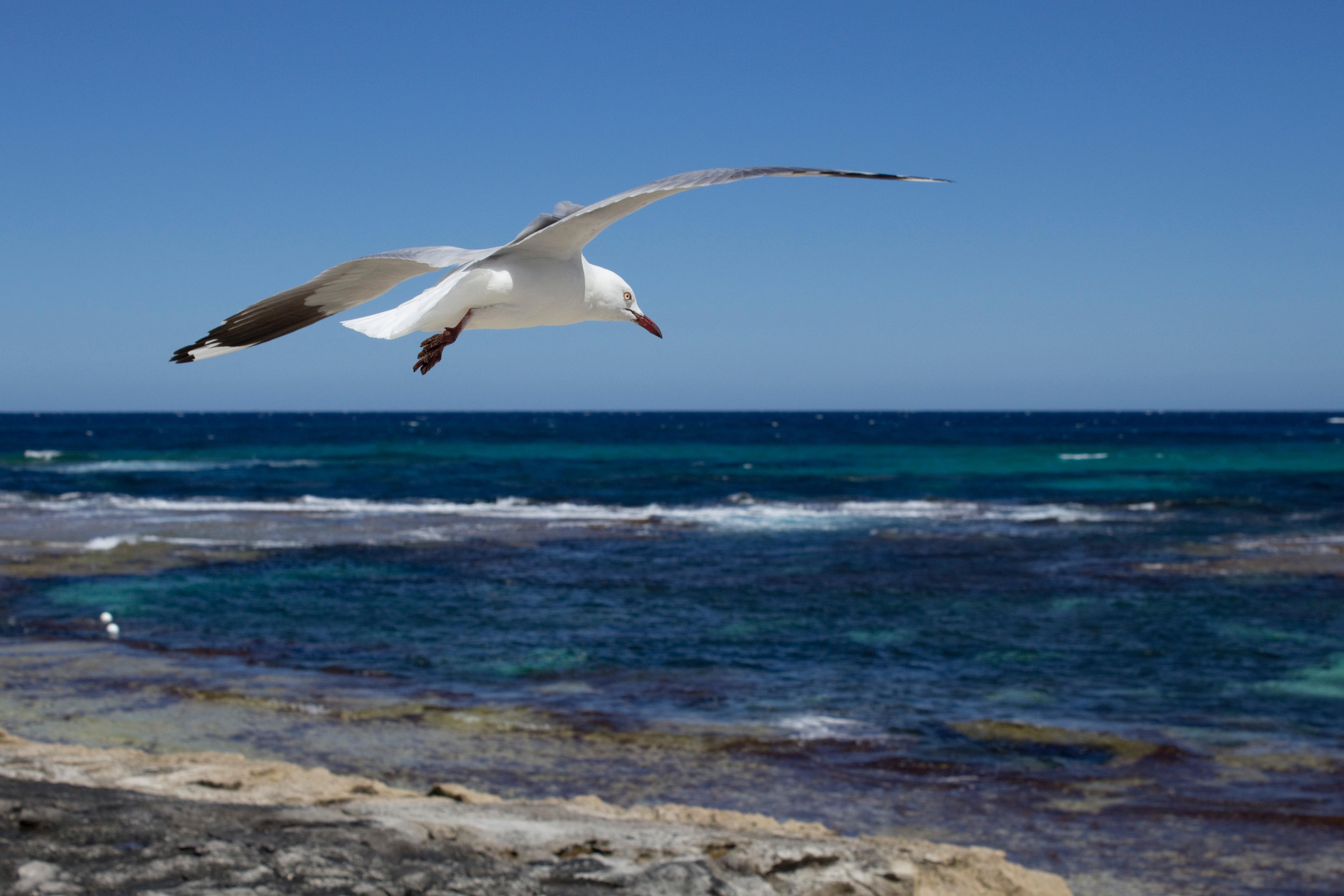 Красивое фото моря с чайками