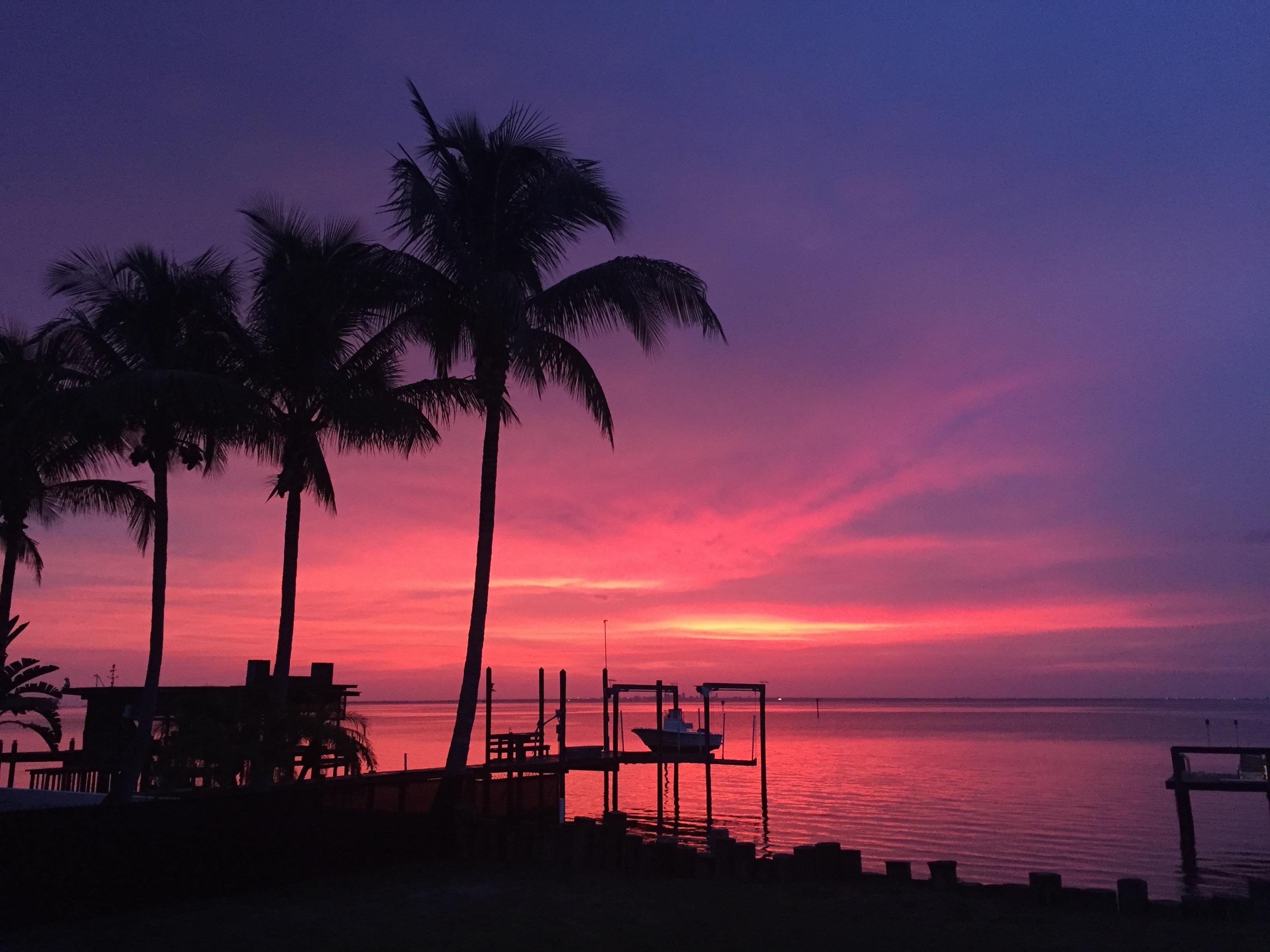 Beach Sea Coast Ocean Horizon Sunrise Sunset Morning Dawn Dusk Evening Pink Sky Palms Silhouettes Florida