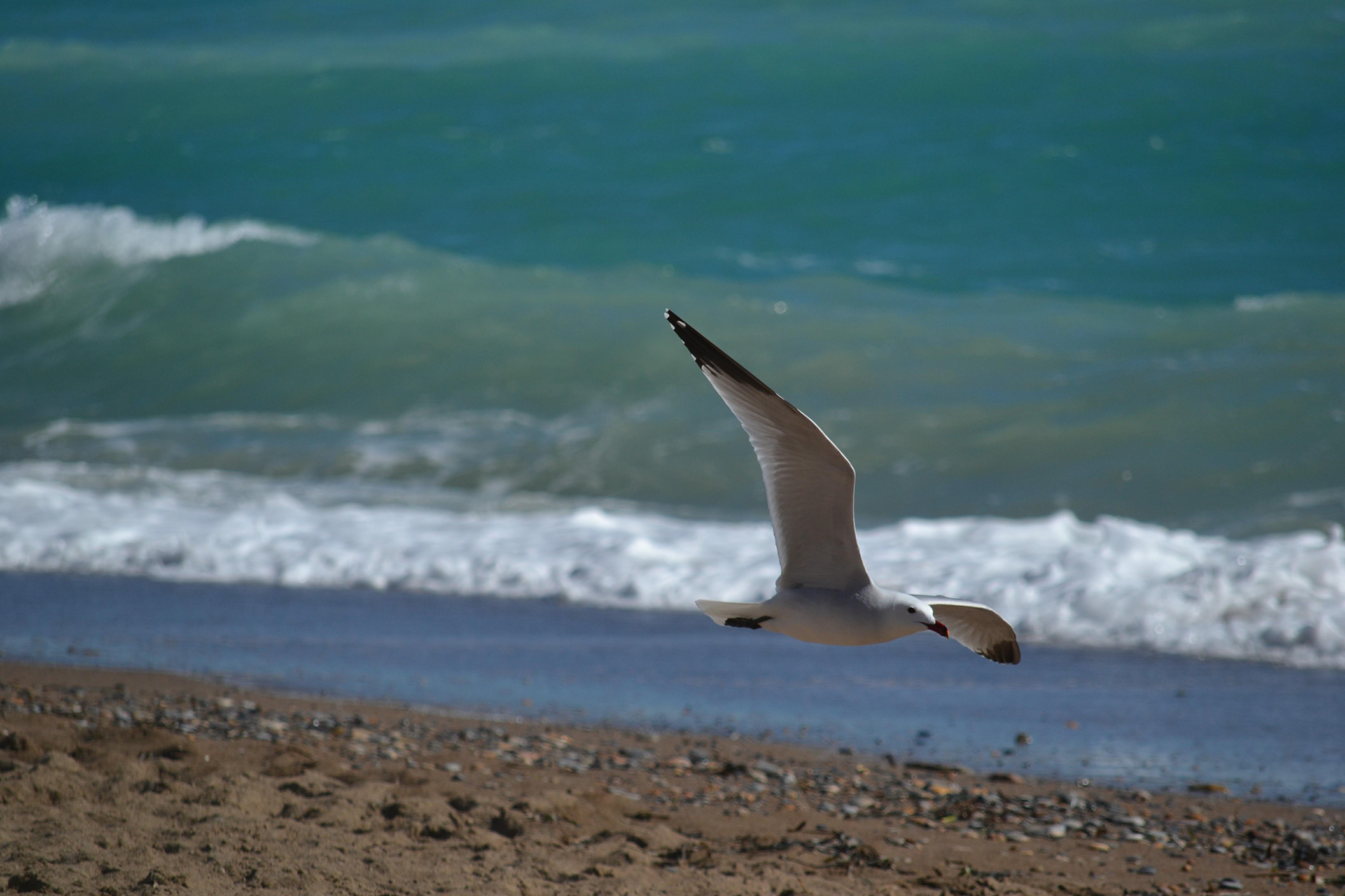 Картинки чайка море