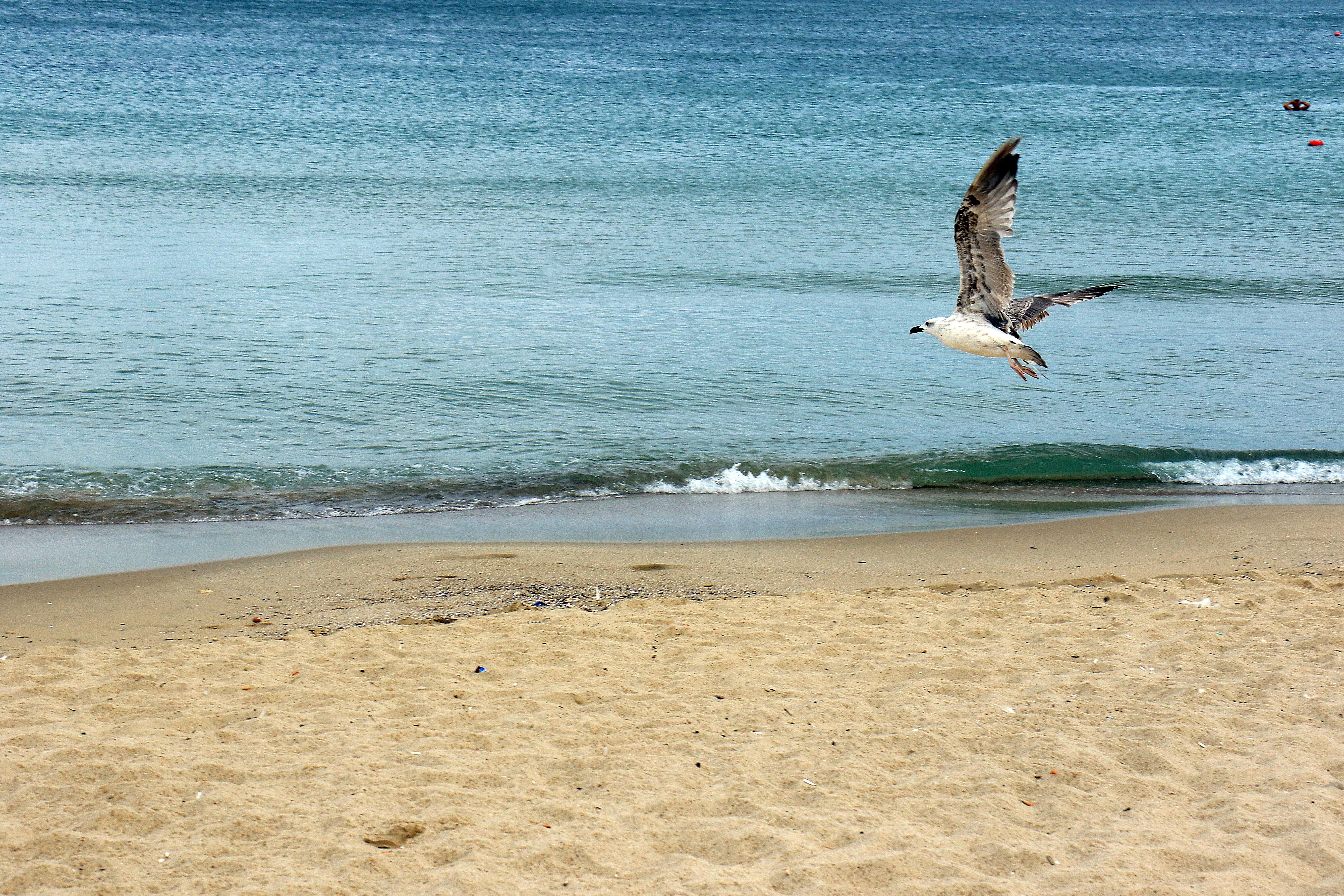 Корзины, картинки море чайки пляж