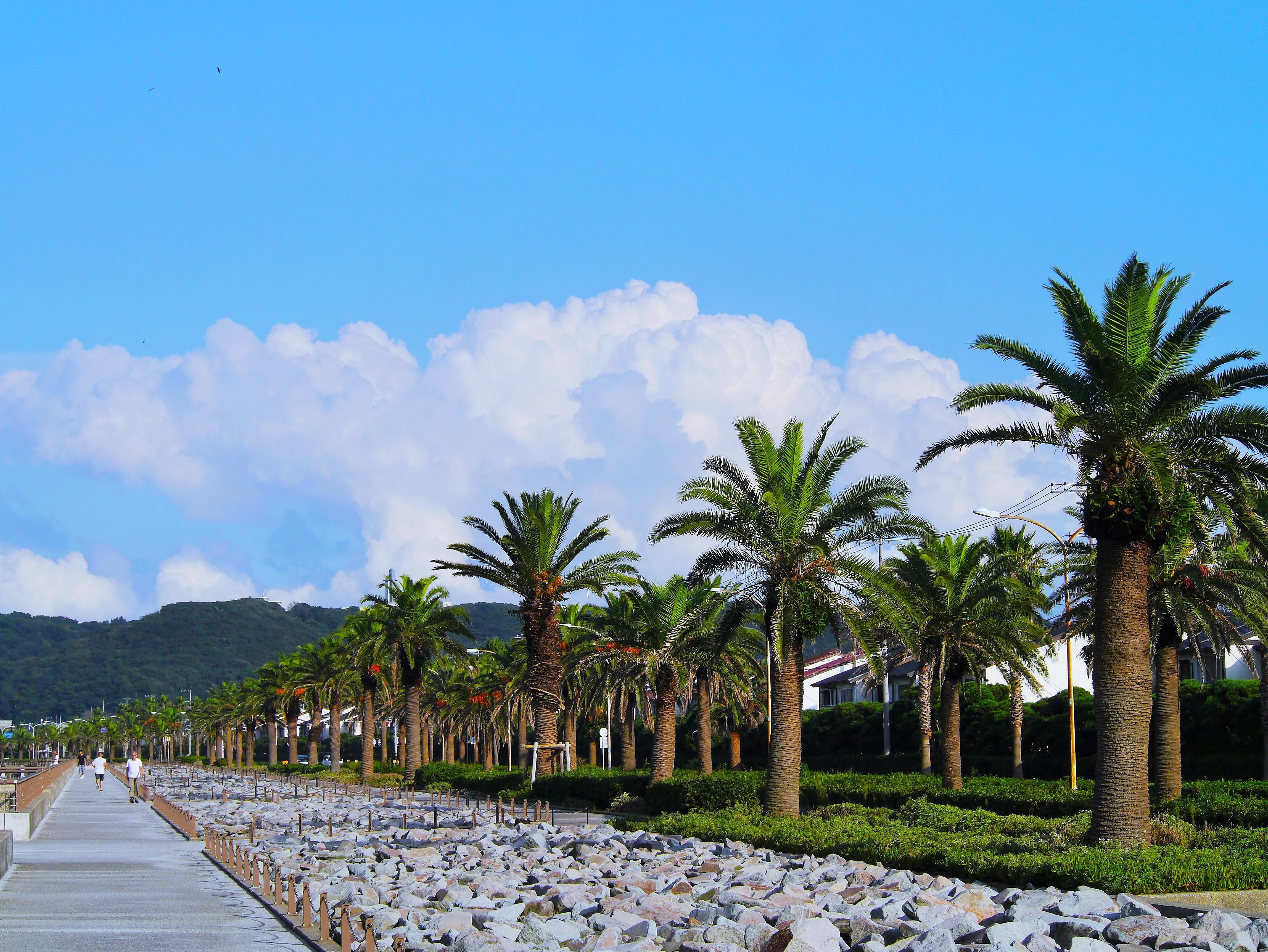 Free Images Beach Sea Coast Cloud Flower Stone Asphalt - Vacation to japan