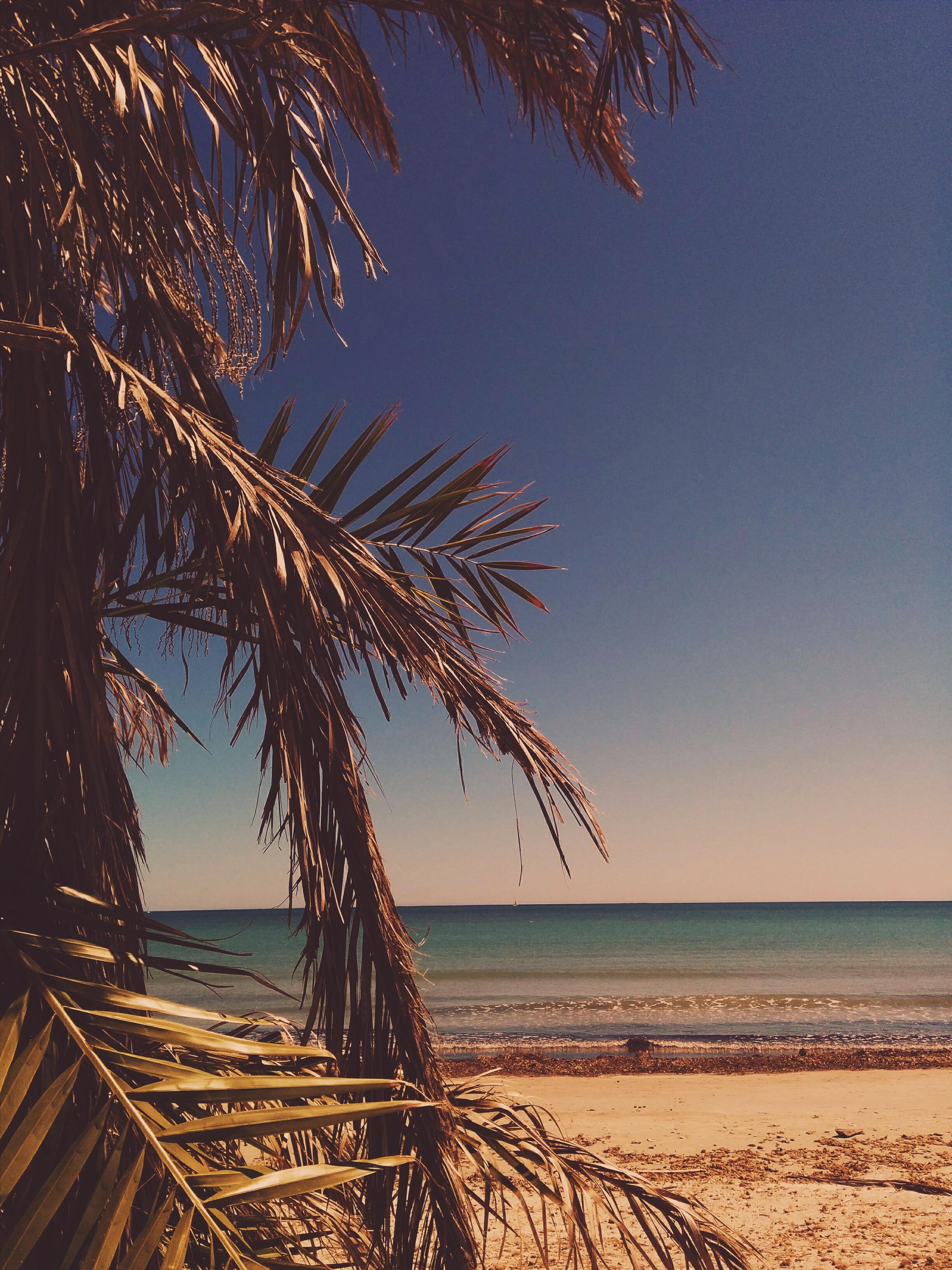 Профессиональное фото море солнце ветка пальмы