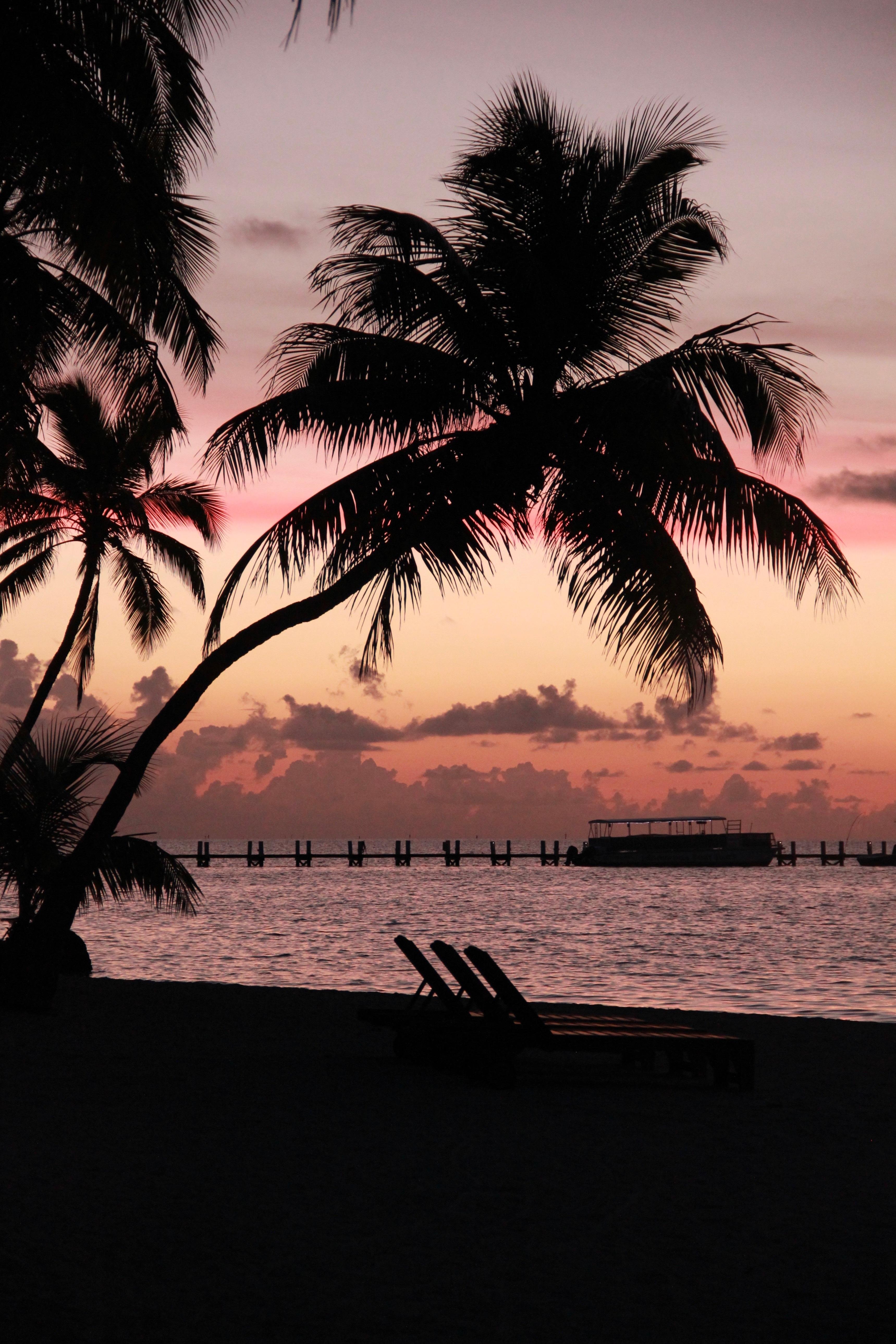 Beach Sea Coast Tree Ocean Horizon Silhouette Sunrise Sunset Sunlight Morning Wave Dawn Dusk Evening Reflection