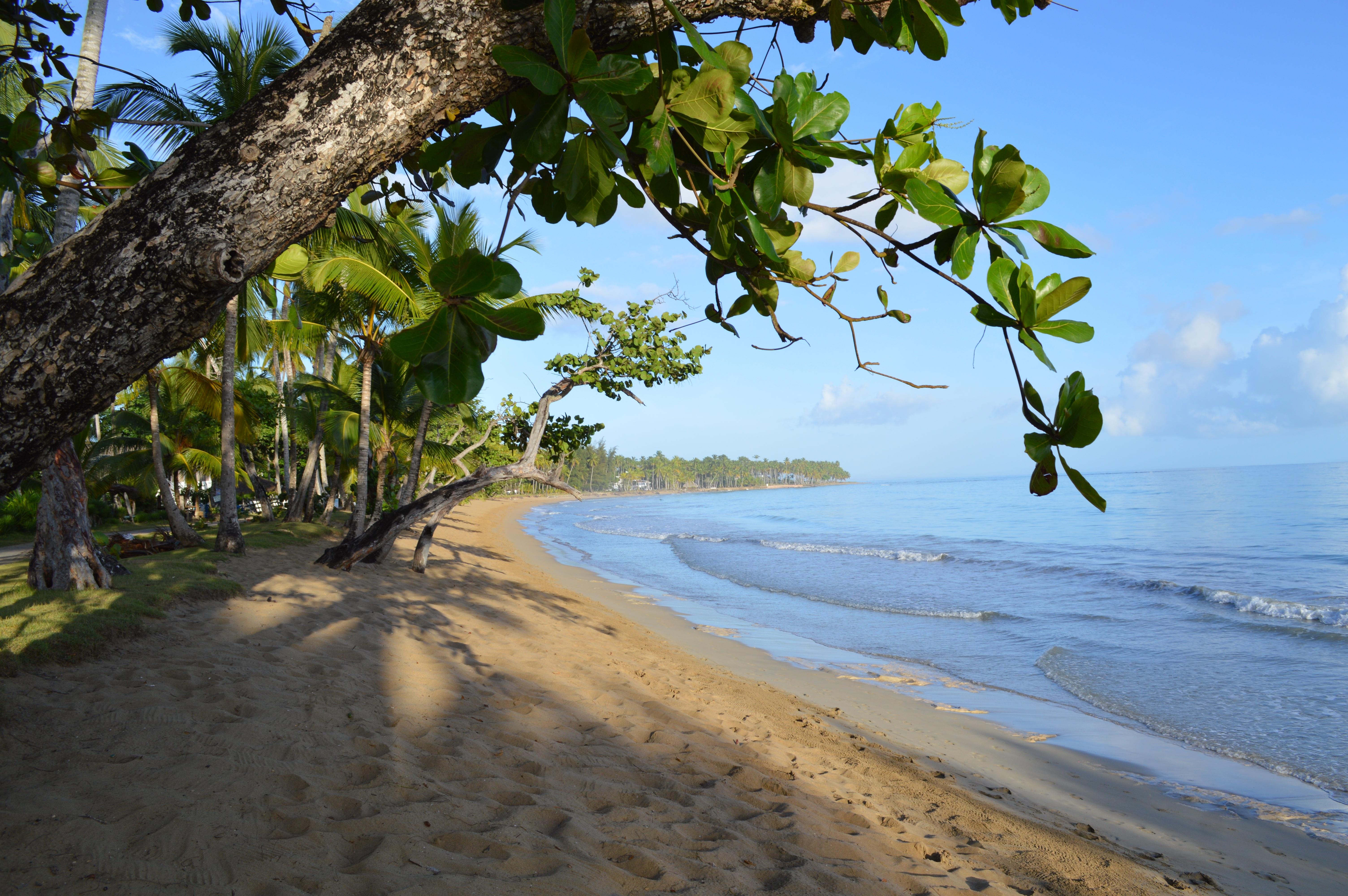 85 Gambar Pohon Anggur Laut HD