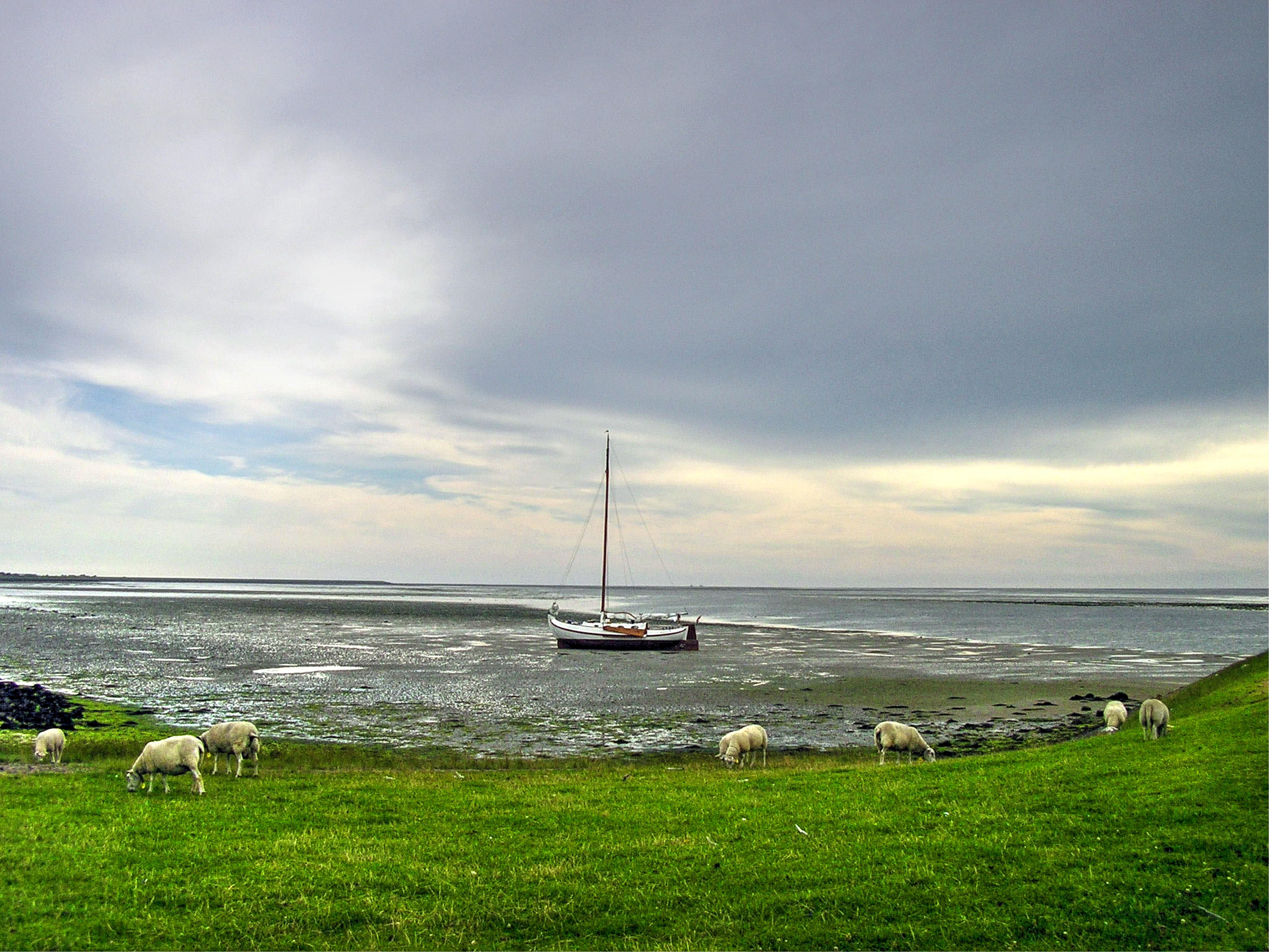 free images   beach  sea  coast  water  grass  ocean  horizon  cloud  sky  boat  field  farm