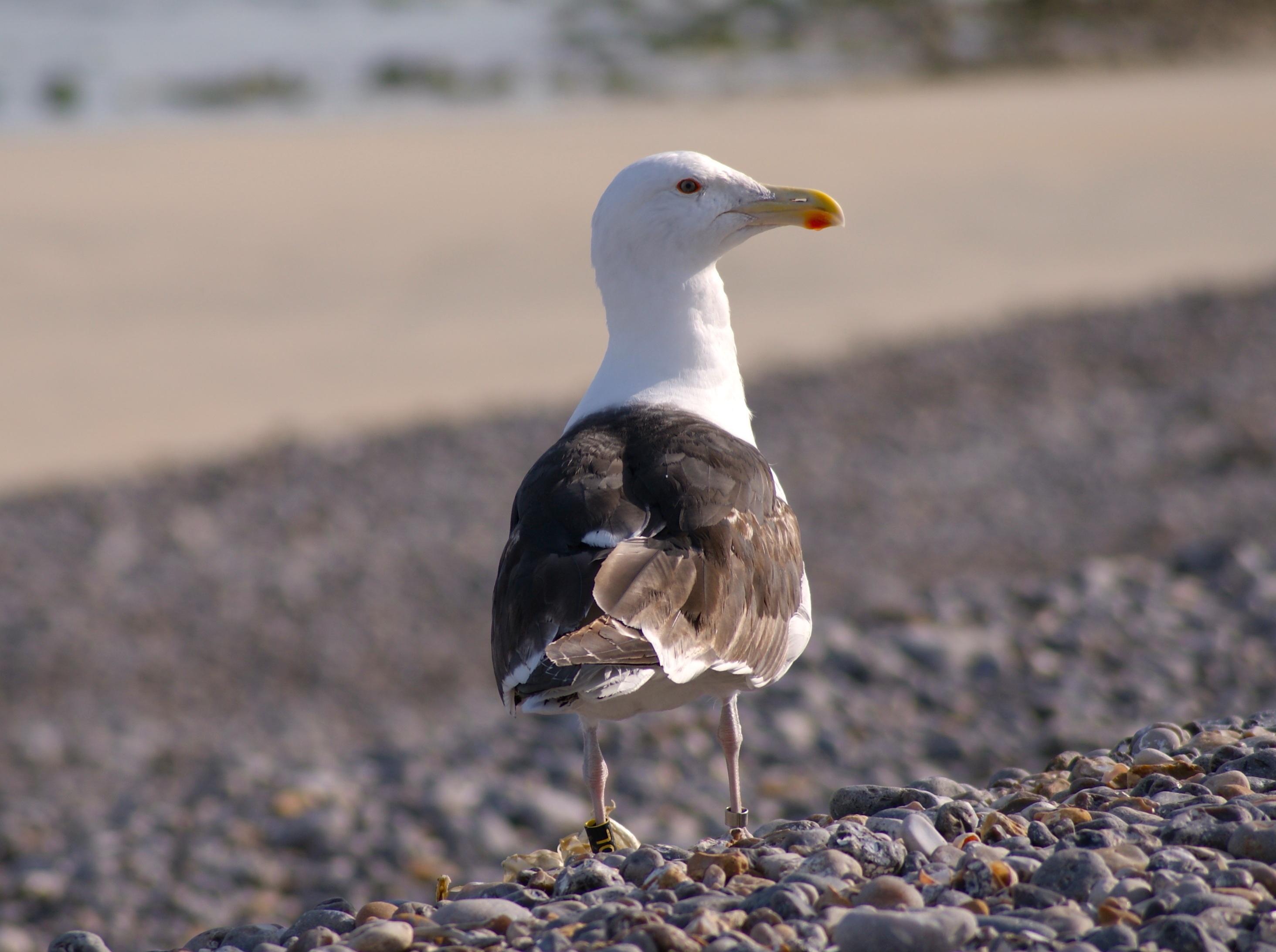 μεγάλο πουλί άσπρ καλύτερο δωρεάν ενηλίκων πορνό