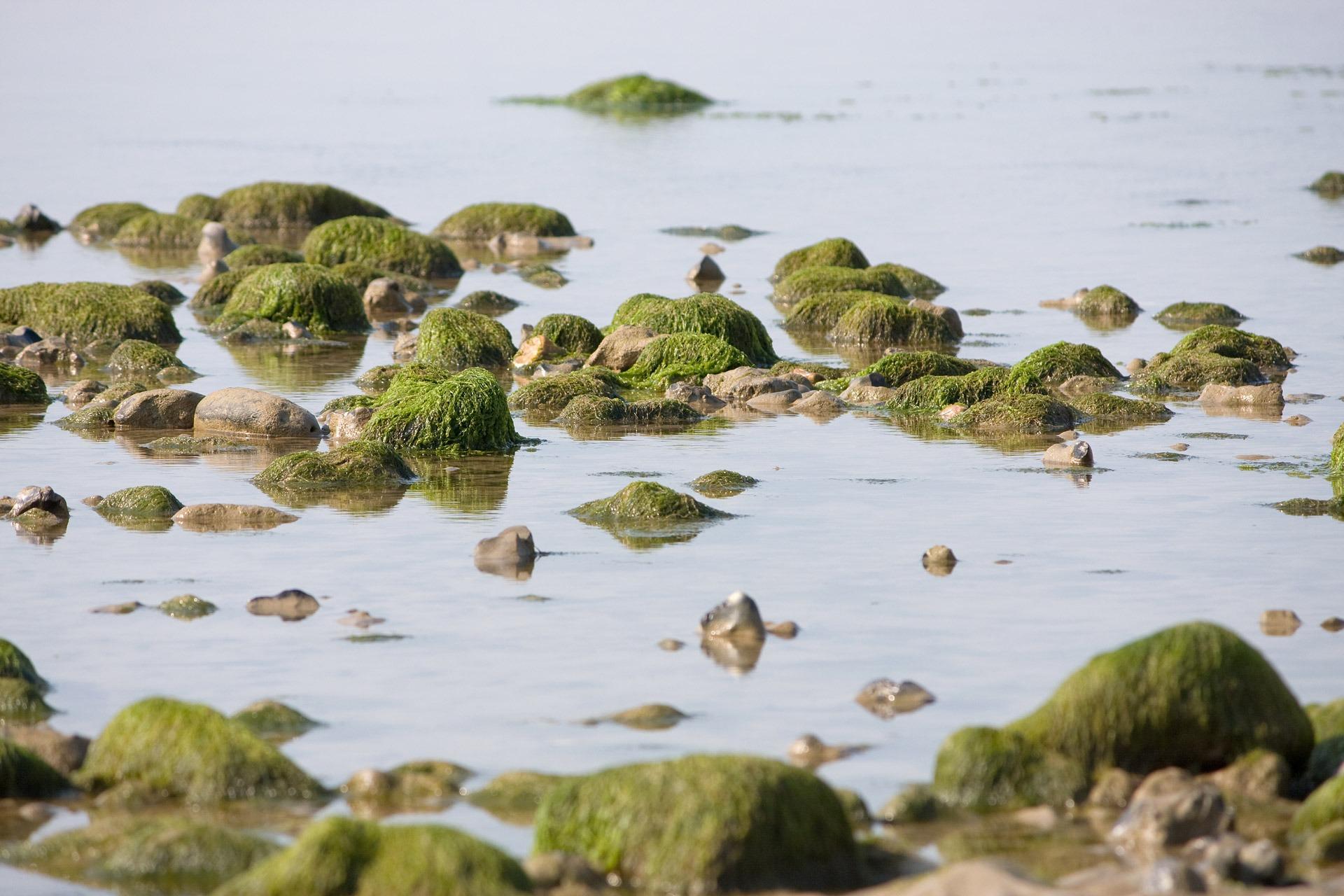 Gratis afbeeldingen strand zee kust water natuur rots foto
