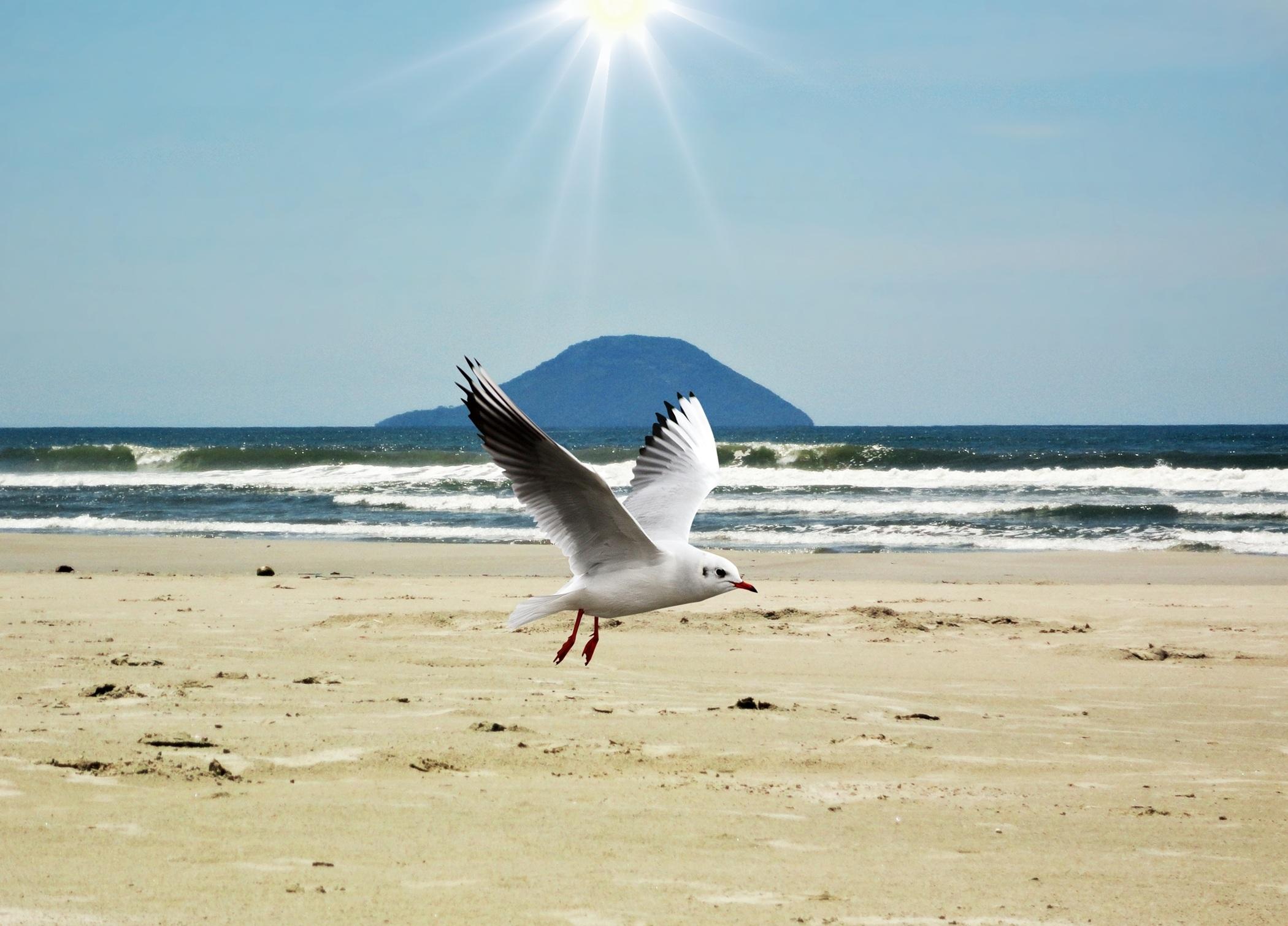 Картинки море чайки пляж, открытки благодарностью
