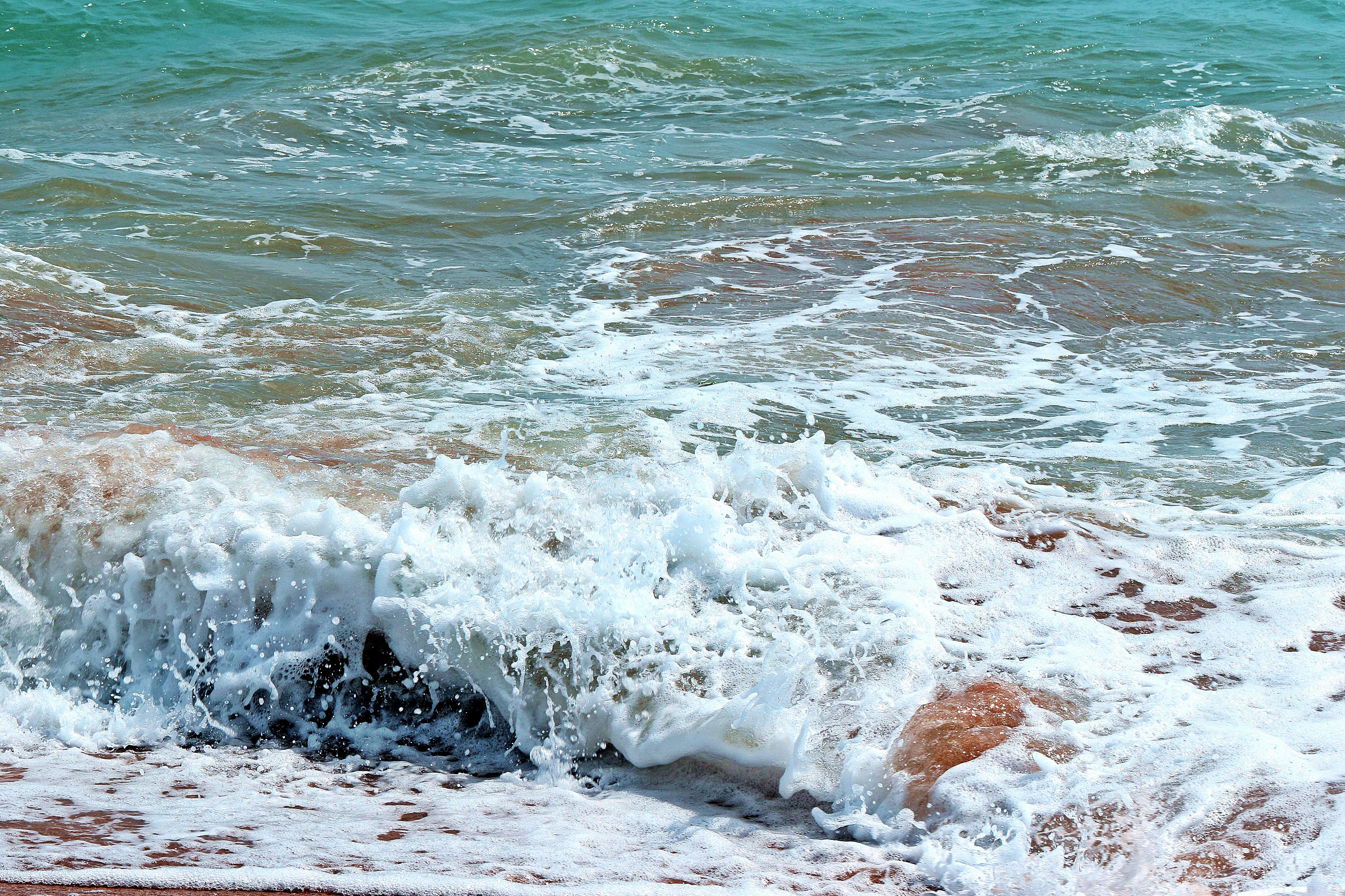 переводе фото бурлящего моря куры представители