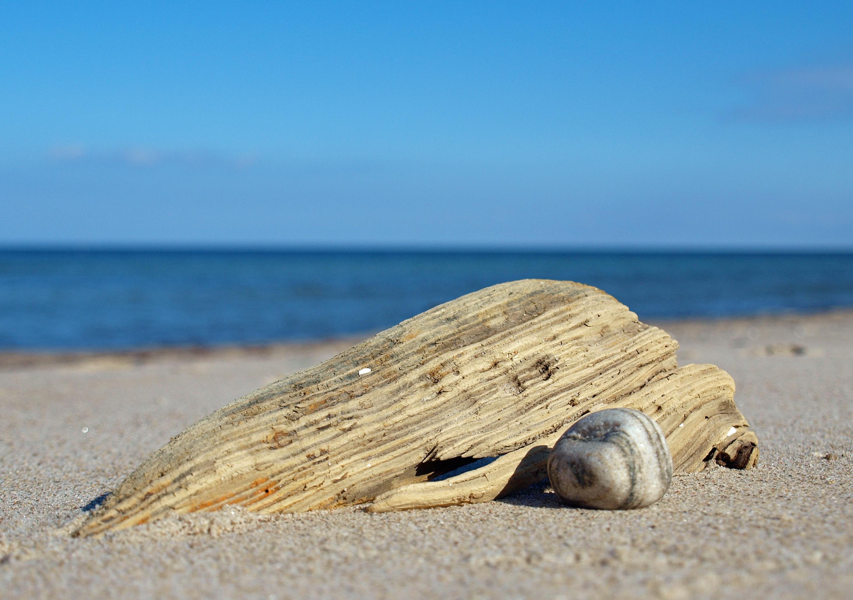 Gratis afbeeldingen strand zee kust water zand rots hout