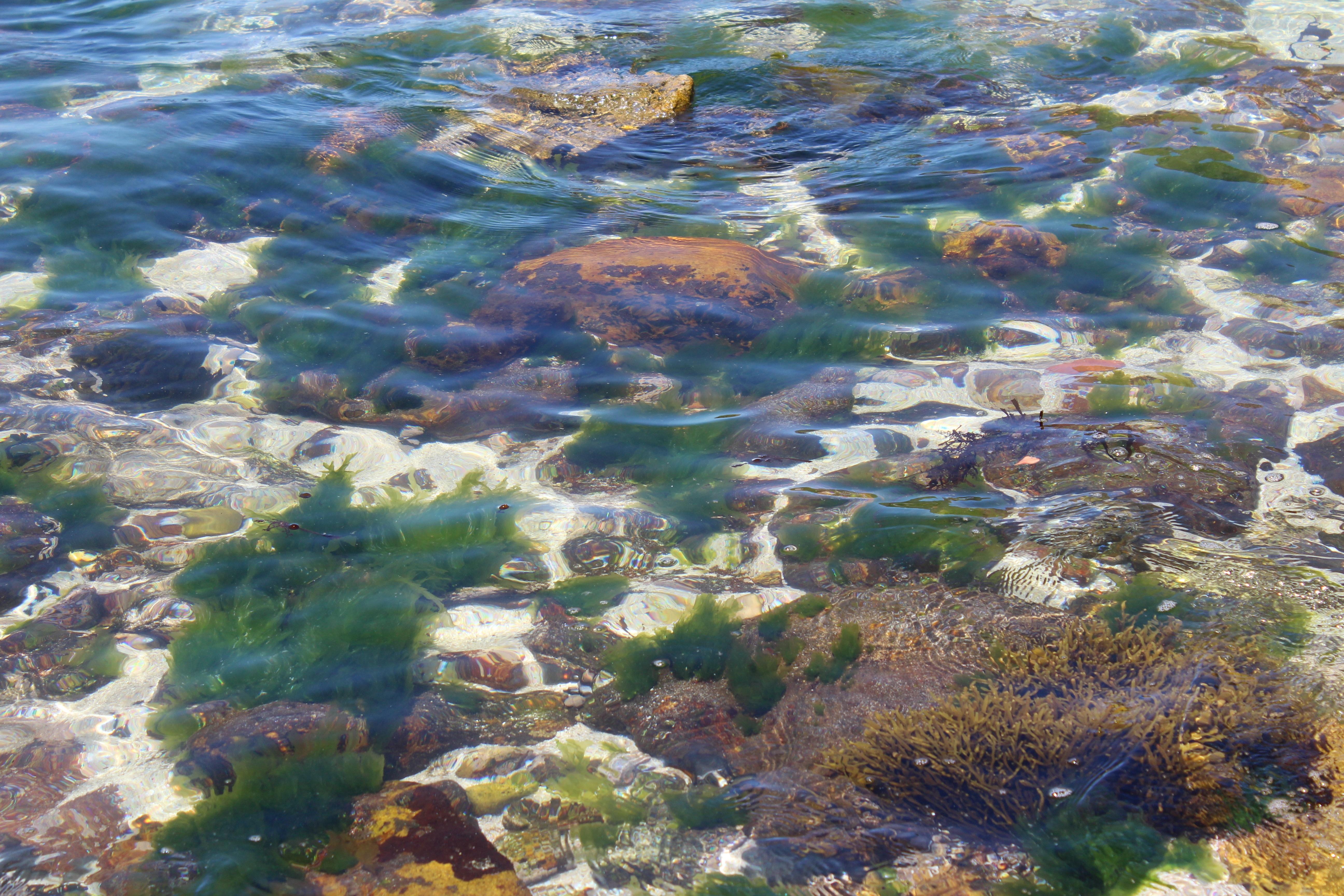Gratis afbeeldingen strand zee kust water kust vijver