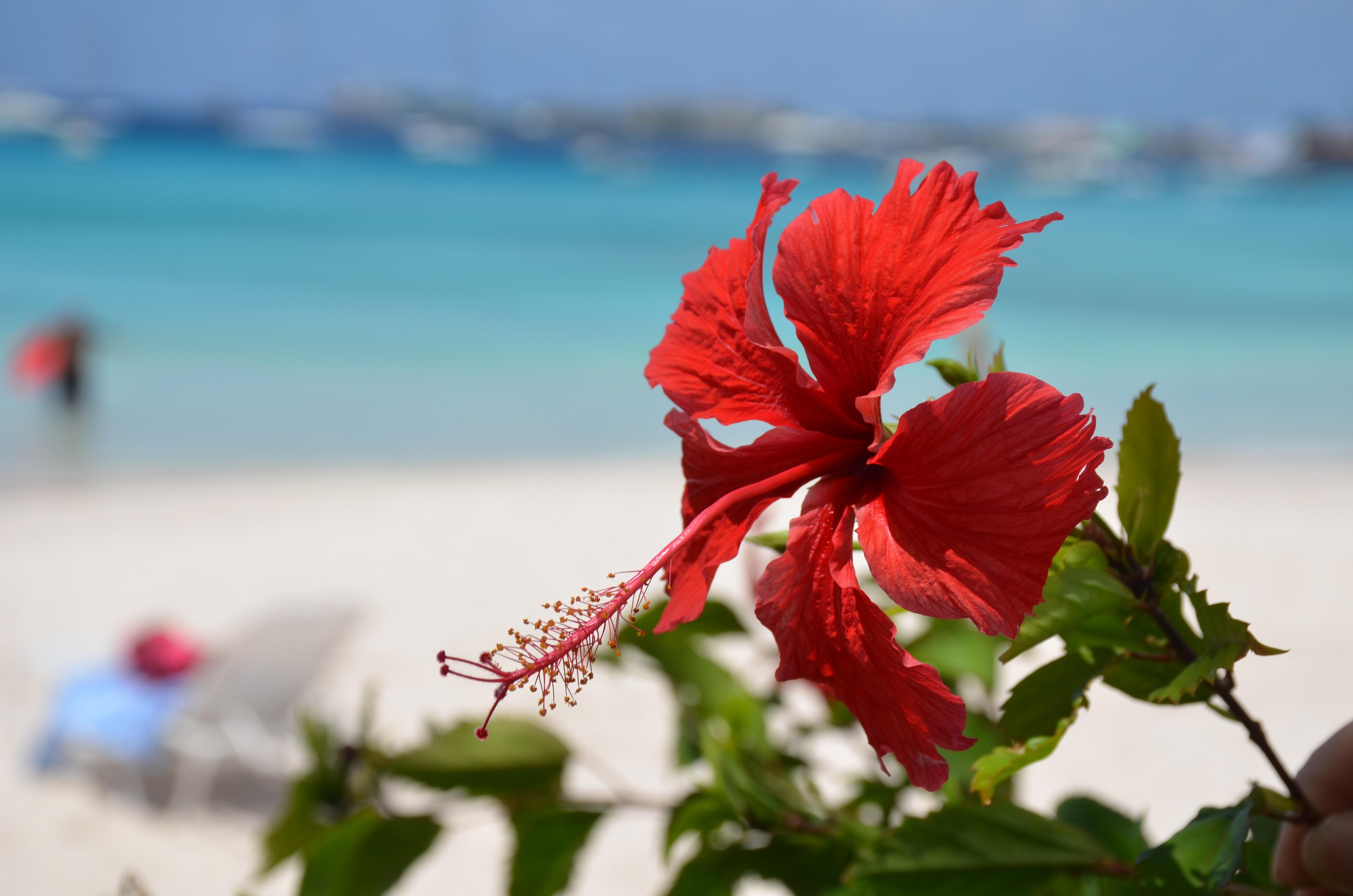 Free Images Sea Nature Sand Blossom Leaf Petal Red Flora