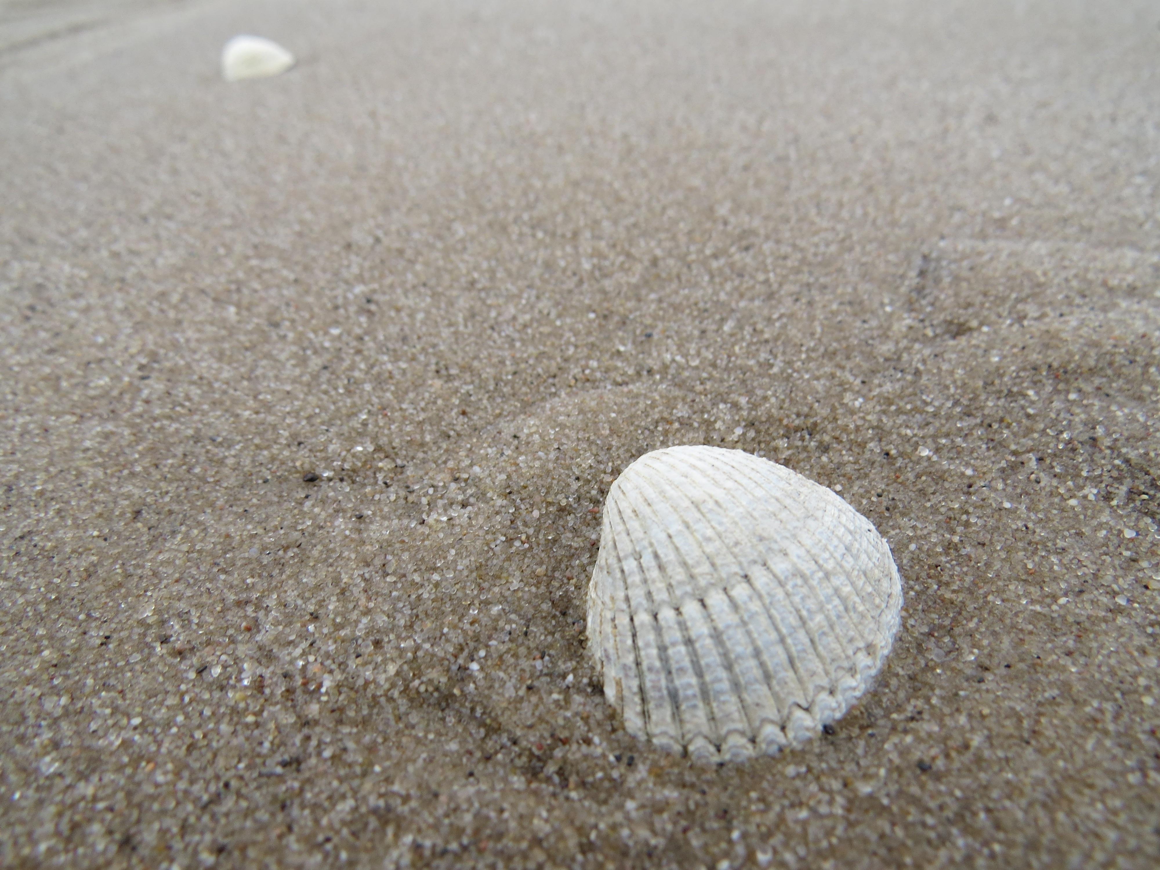 Gambar Alam Bahan Kulit Invertebrata Kerang Laut Laut Baltik