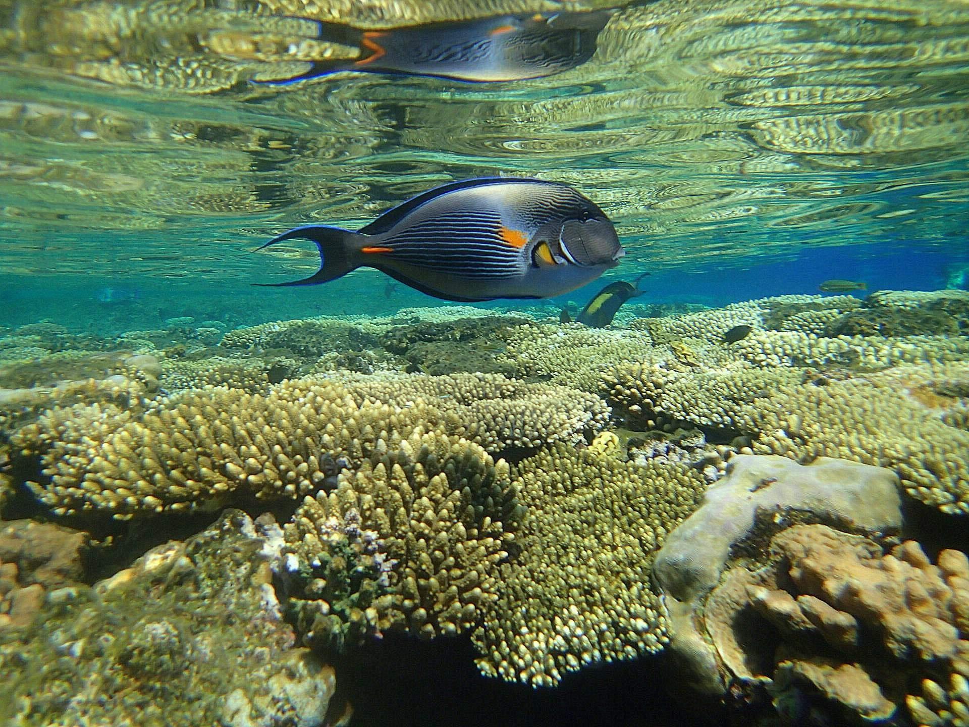 как красиво рыбы атлантического океана фото регулярно публикует