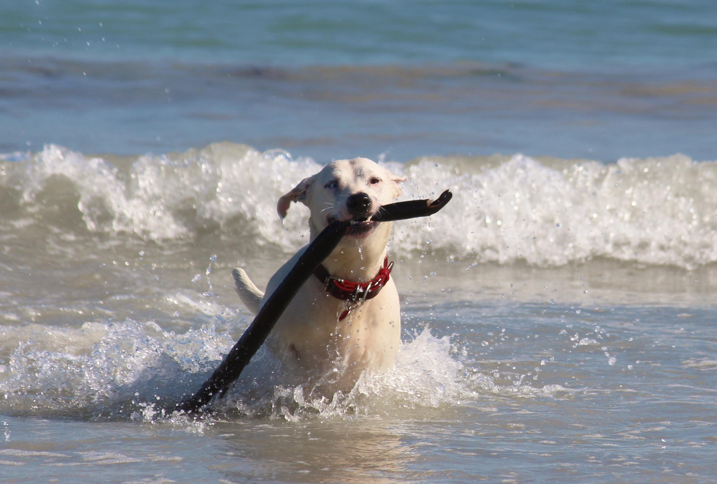 остается фото с лабрадором на море меня ливадийский