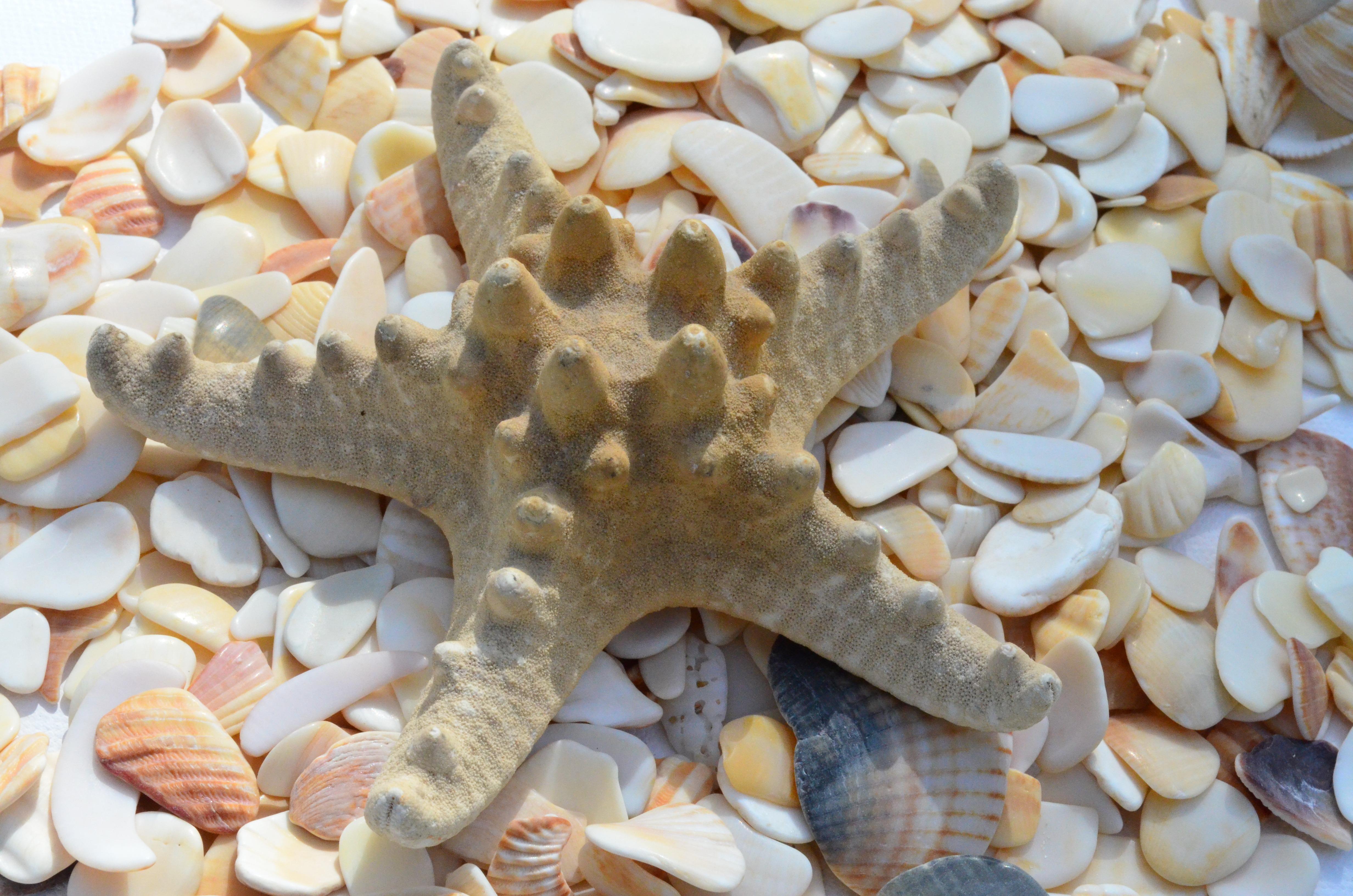 Новым, картинки морские звезды и ракушки